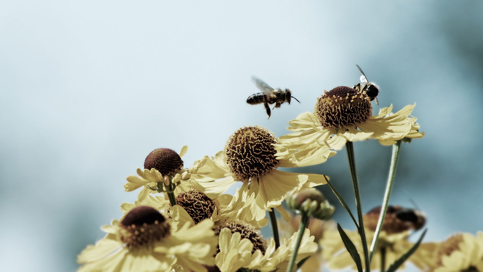 show me a picture of a honey bee