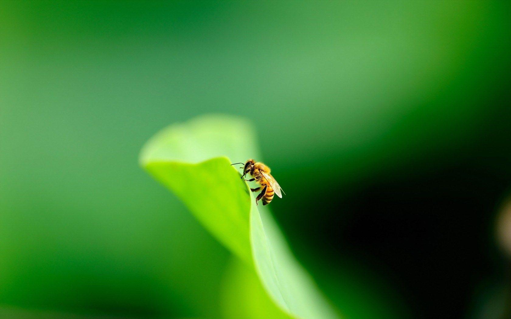 amazing bee photos