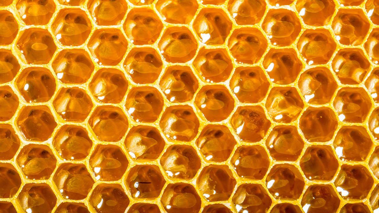 images of honeybees