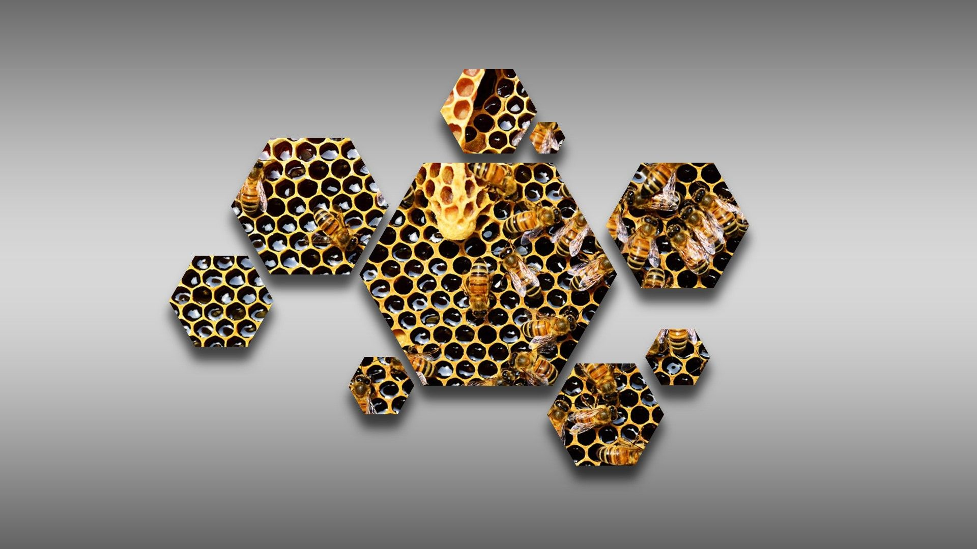 photos of honey bees
