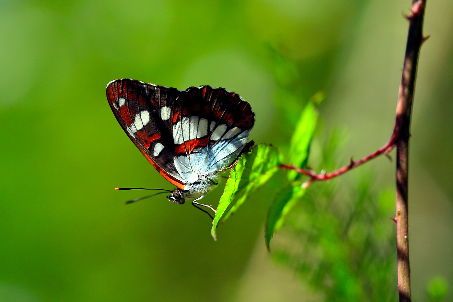 butterfly images hd