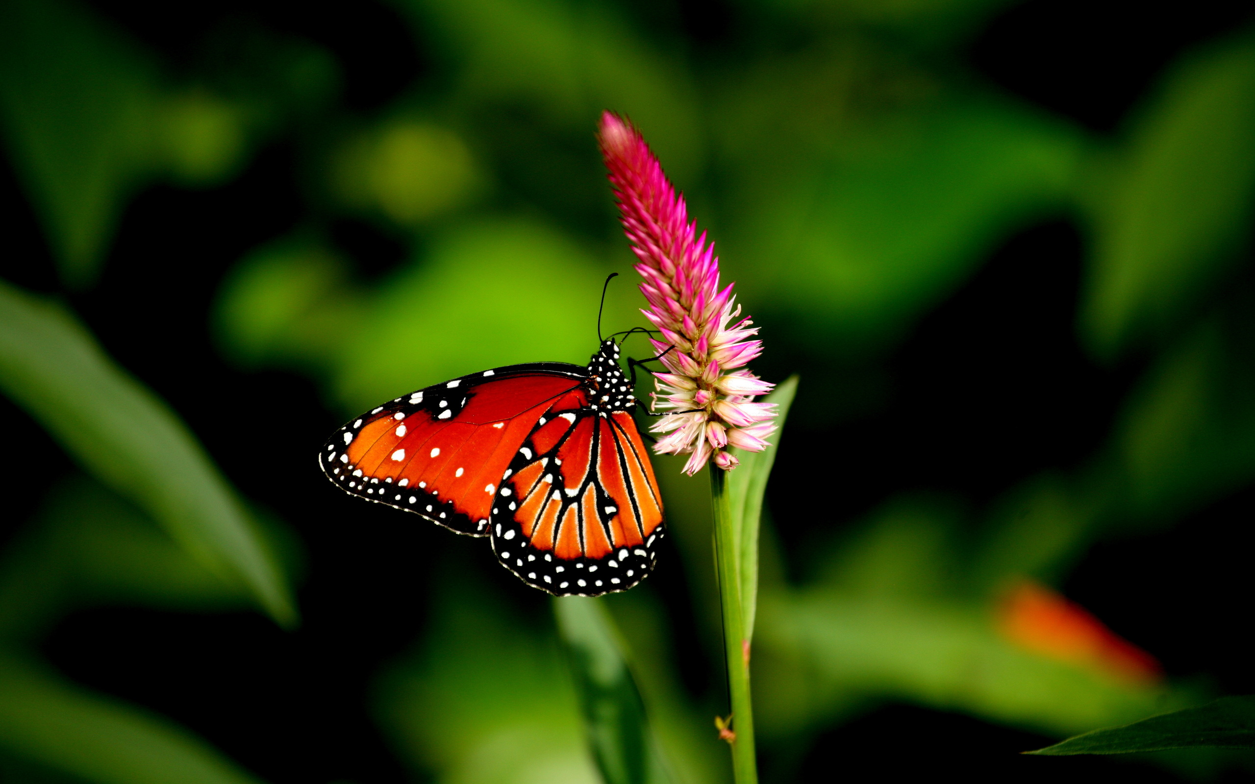 butterfly hd images
