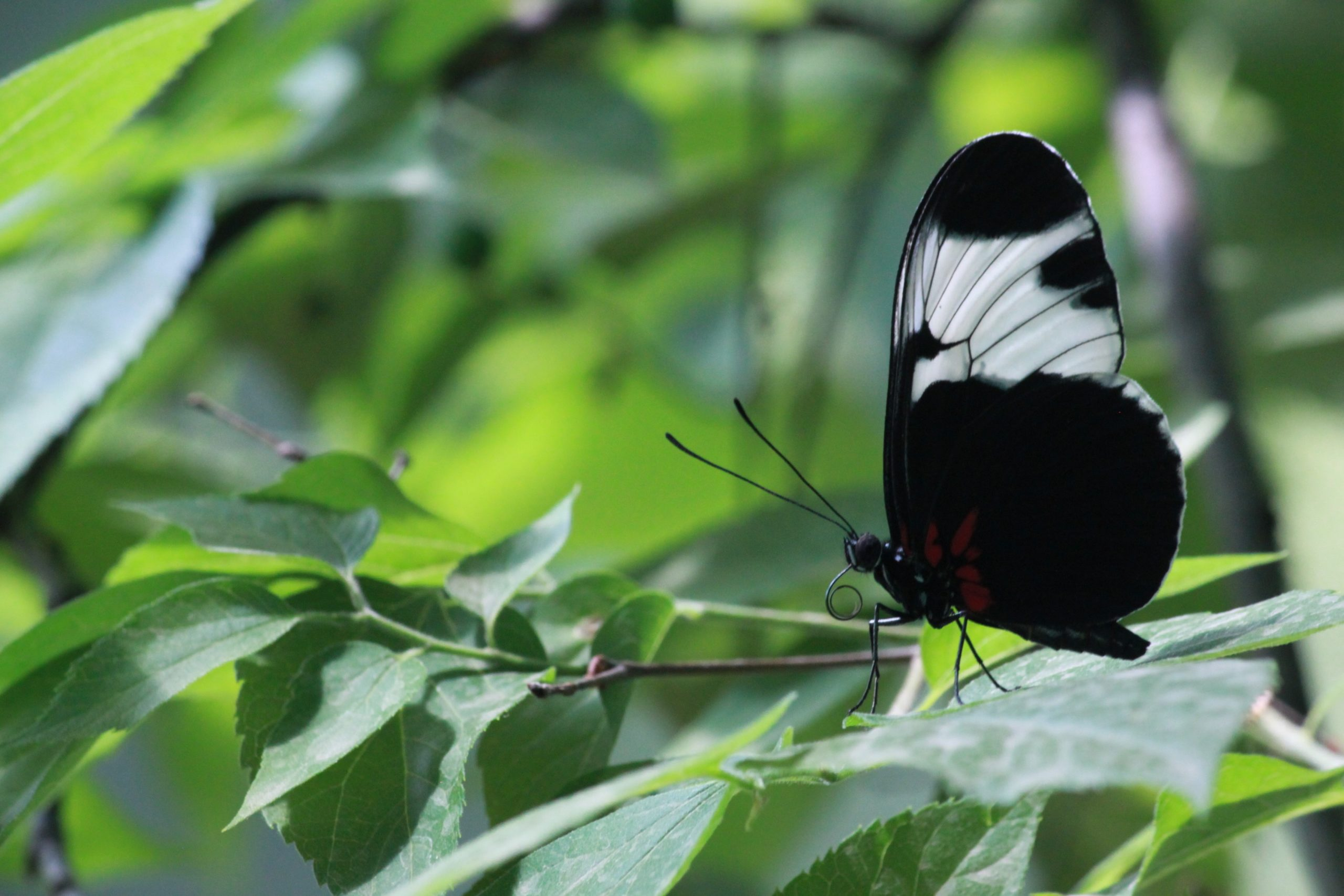 butterfly images hd wallpaper