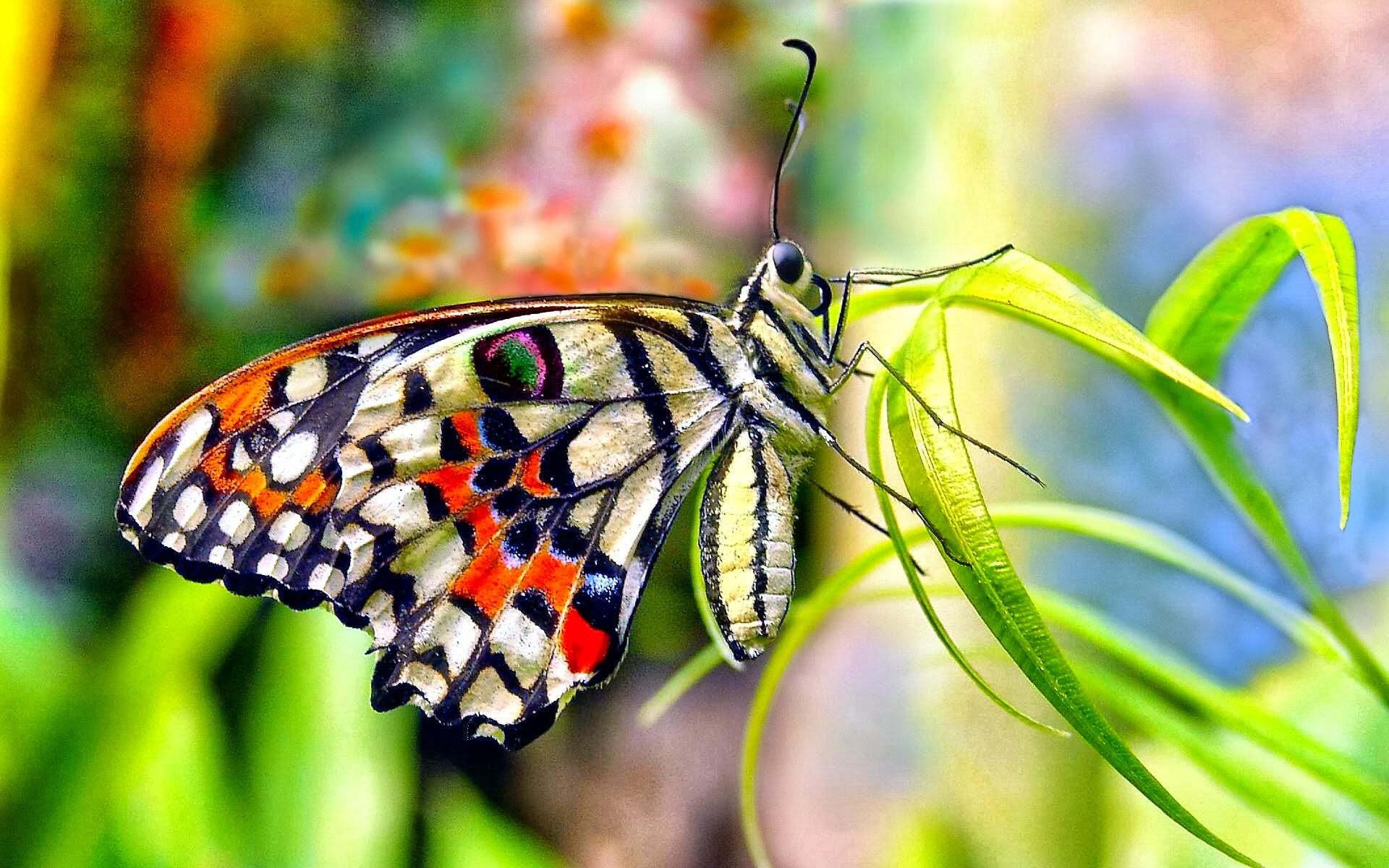 butterfly hd photos