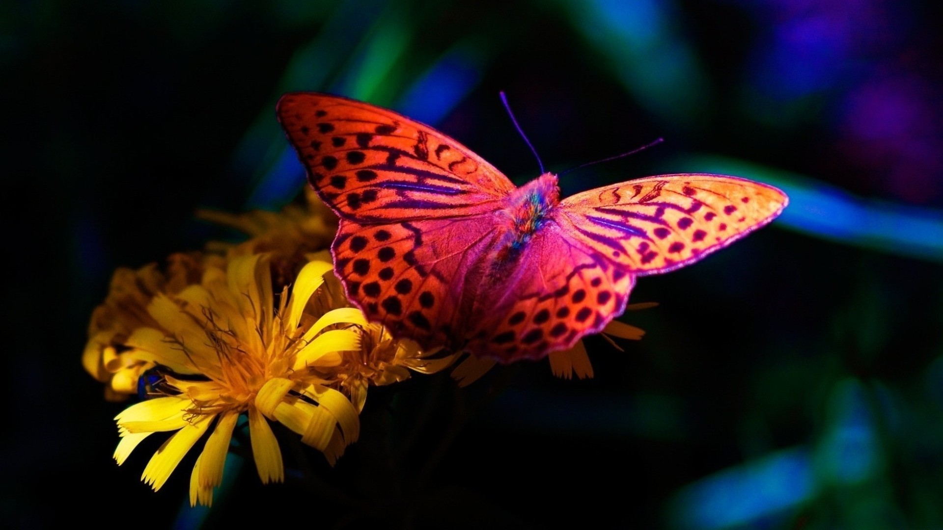 hd wallpapers of butterfly