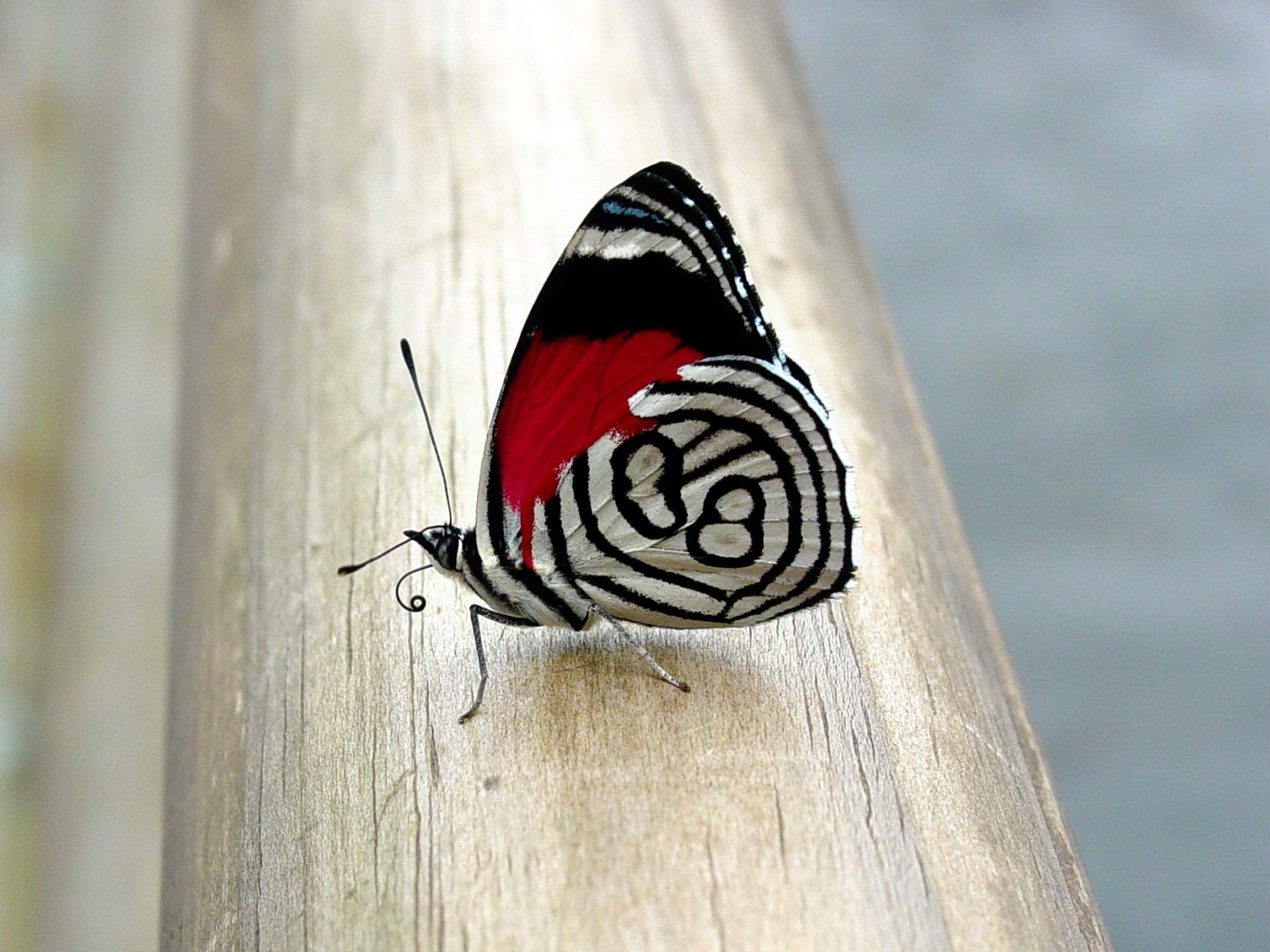 hd butterfly images