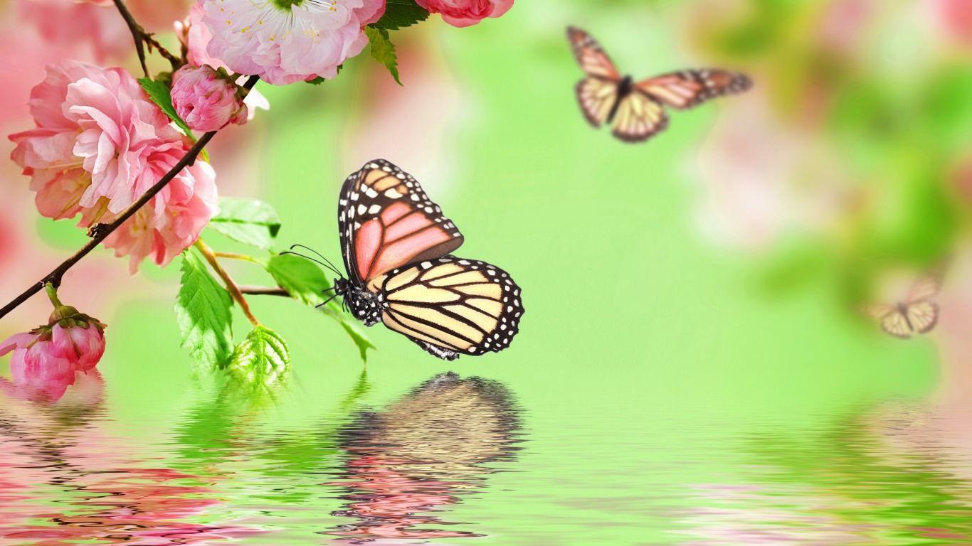 hd butterfly wallpaper free download