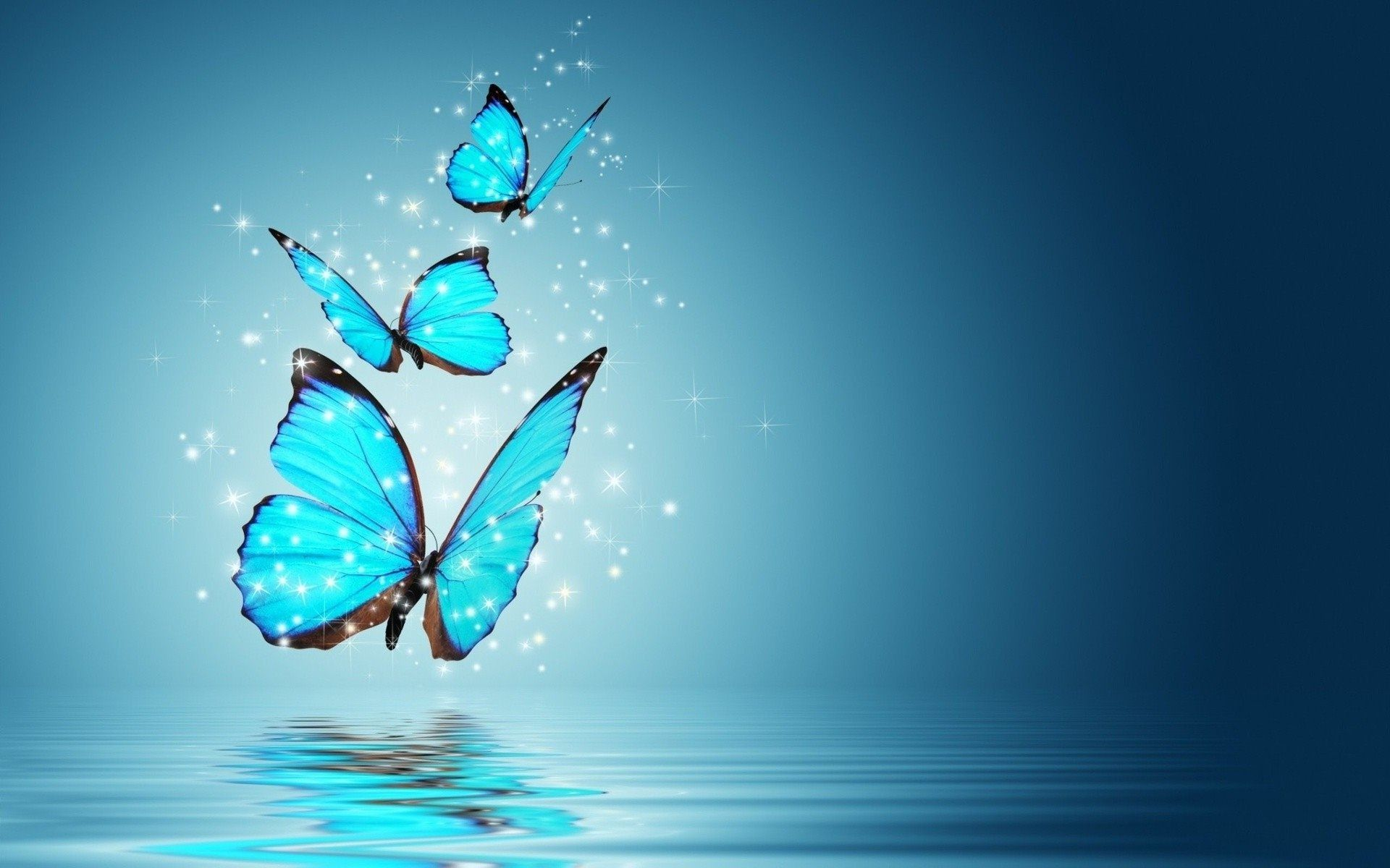 butterfly photos download