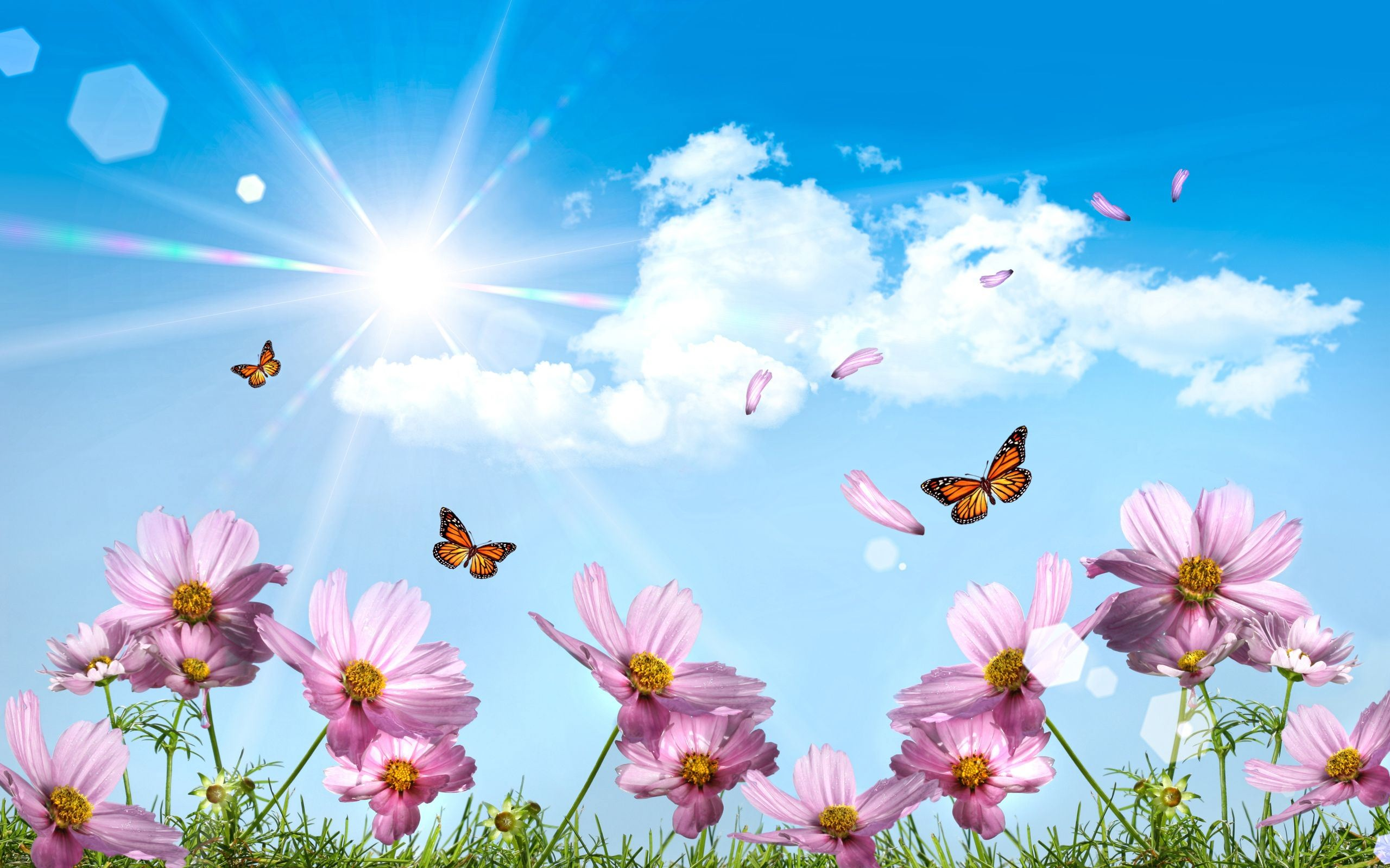 butterfly download free wallpapers