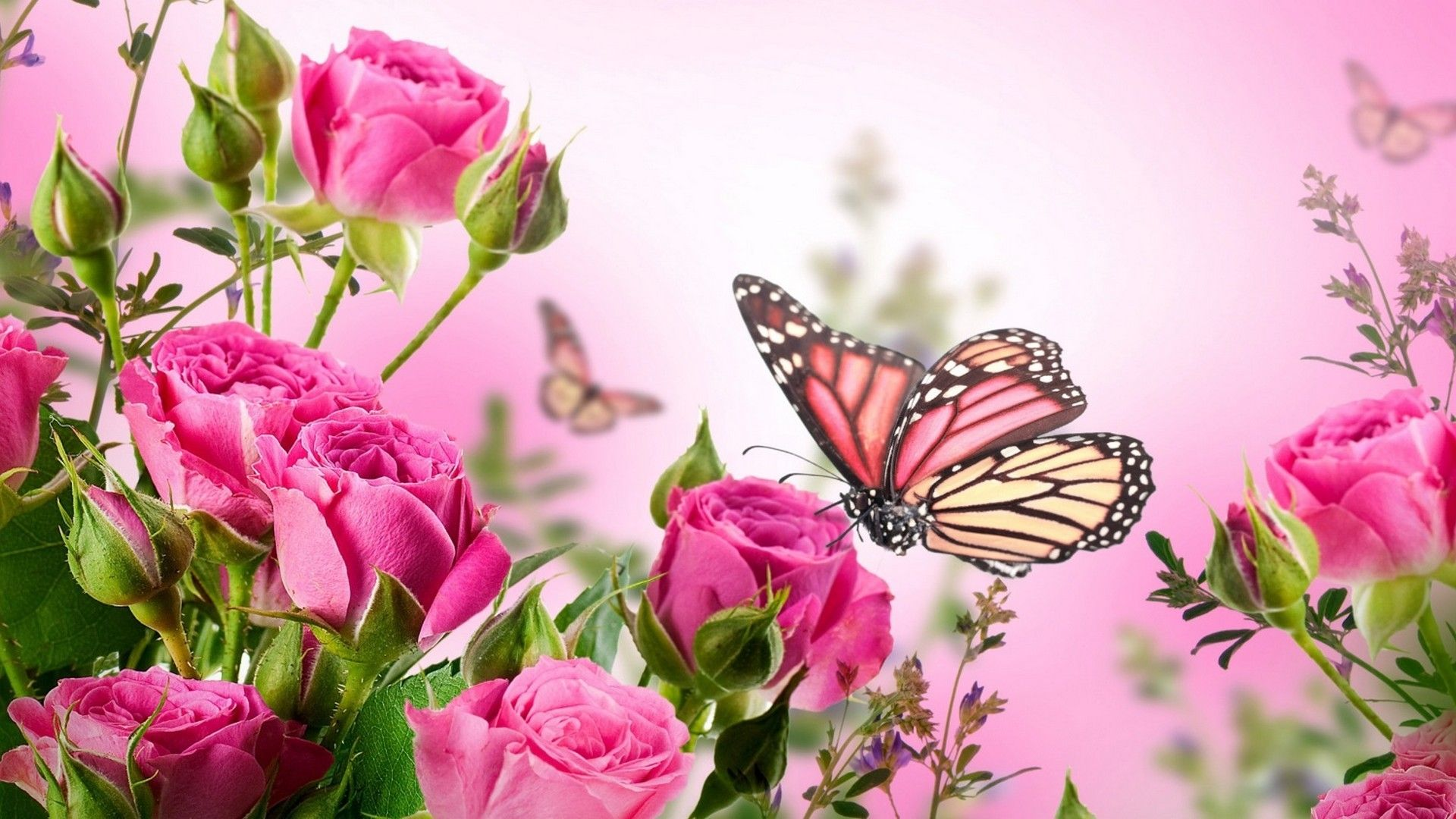 download 4k butterfly wallpapers