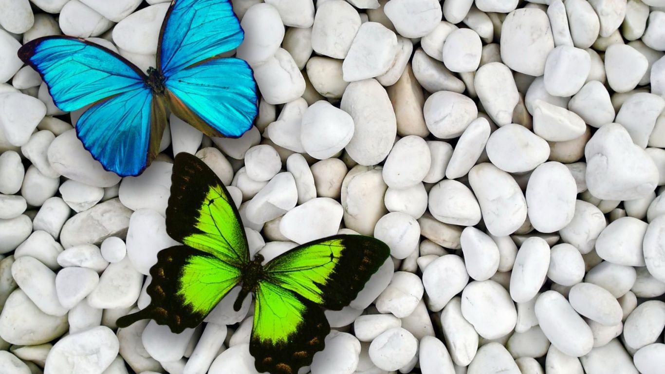 beautiful butterfly wallpapers hd