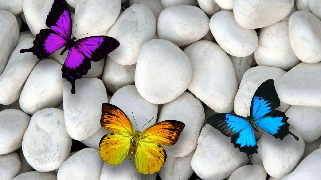hd wallpapers of butterflies