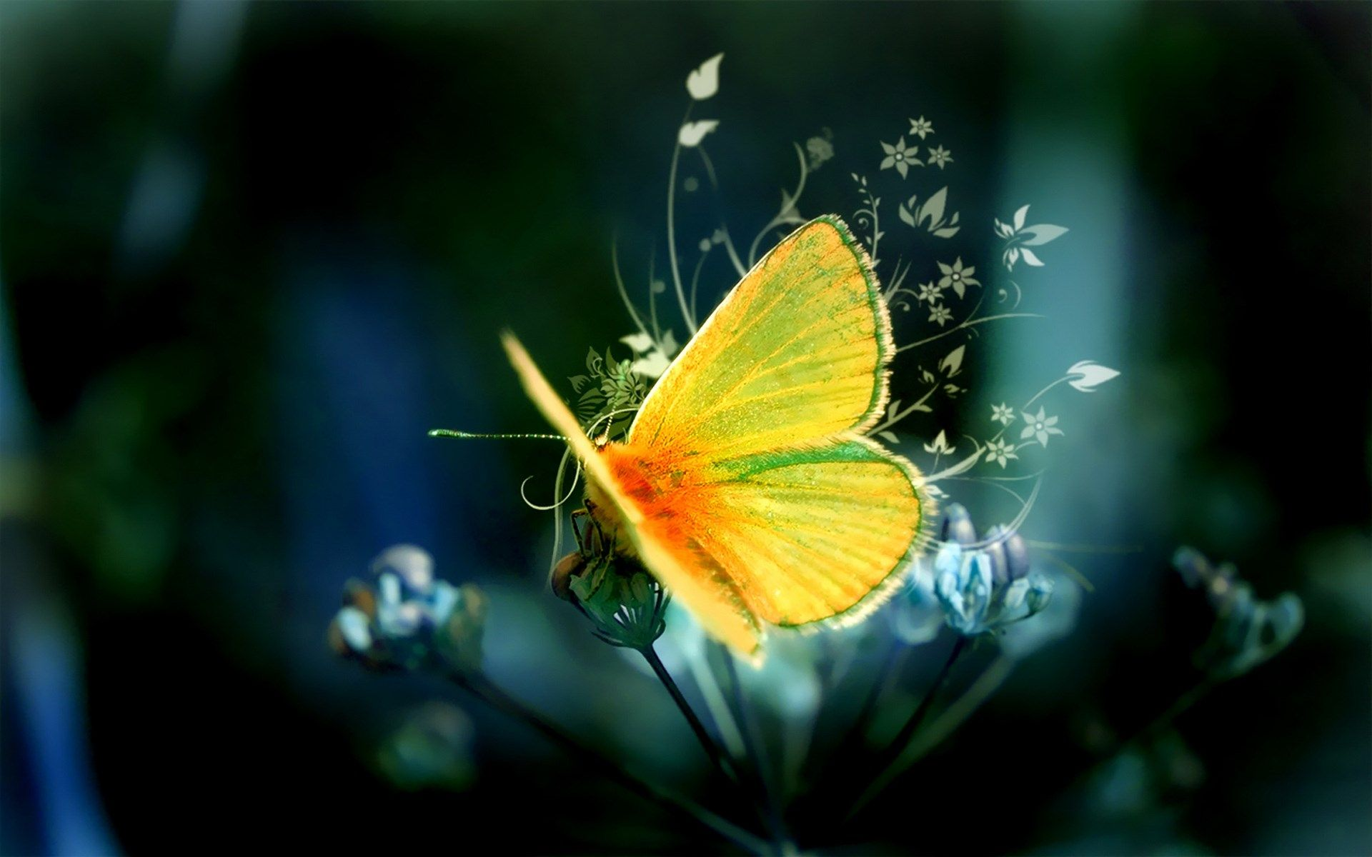 butterfly hd wallpapers free download