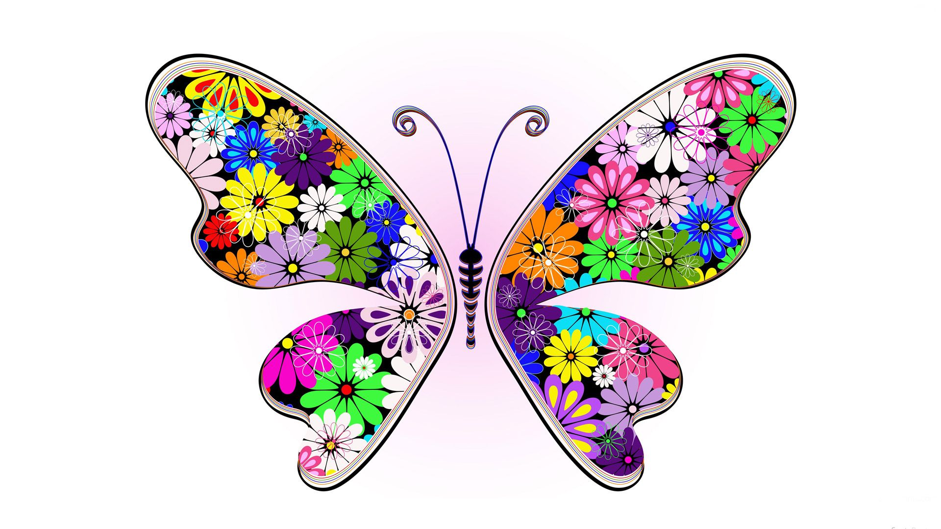 butterfly hd wallpaper free download