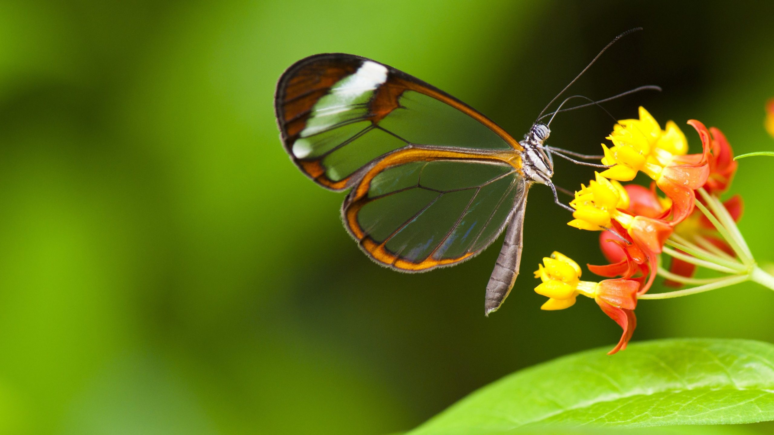 beautiful butterfly wallpapers free download
