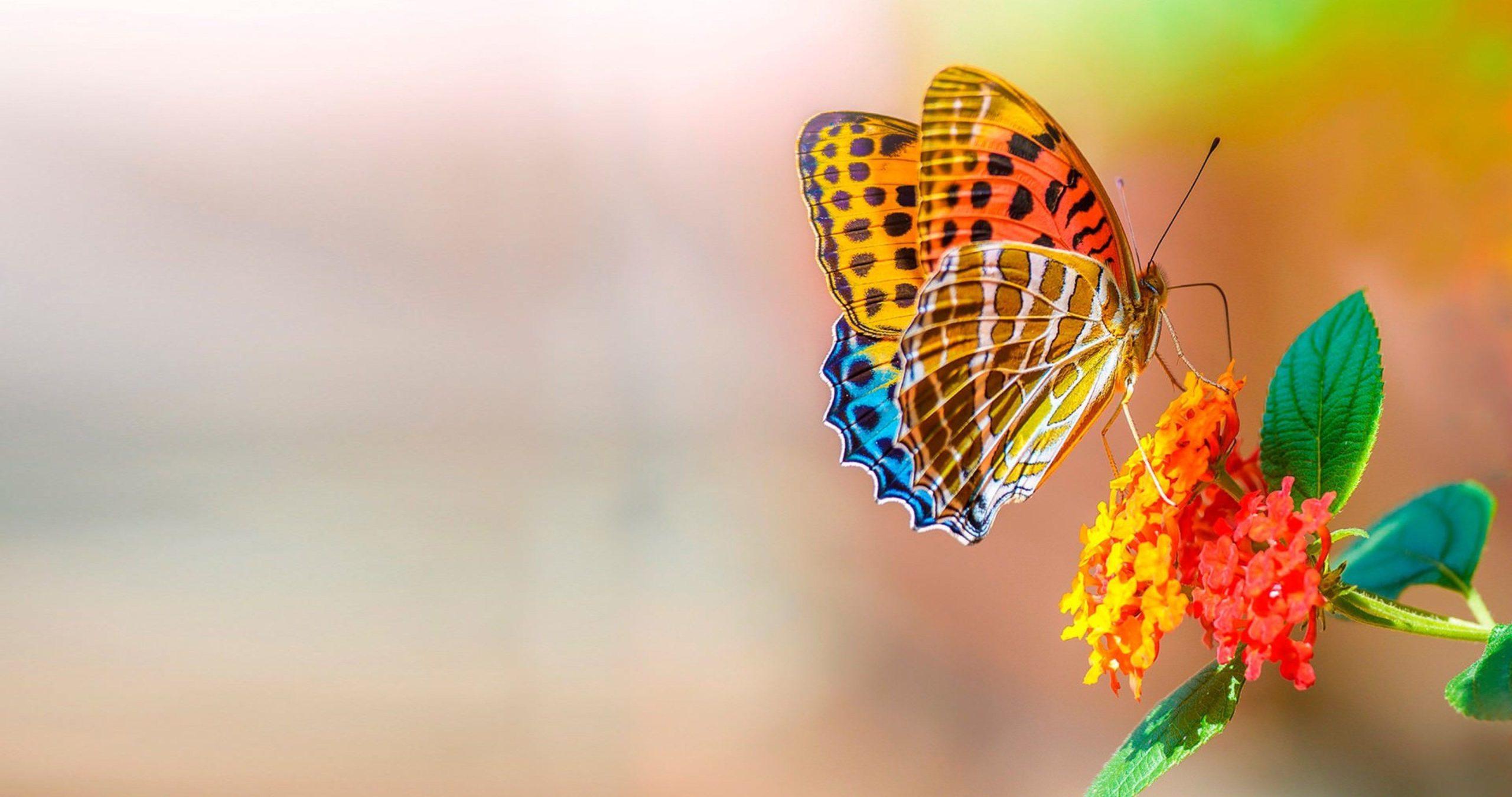 wallpaper butterfly flowers