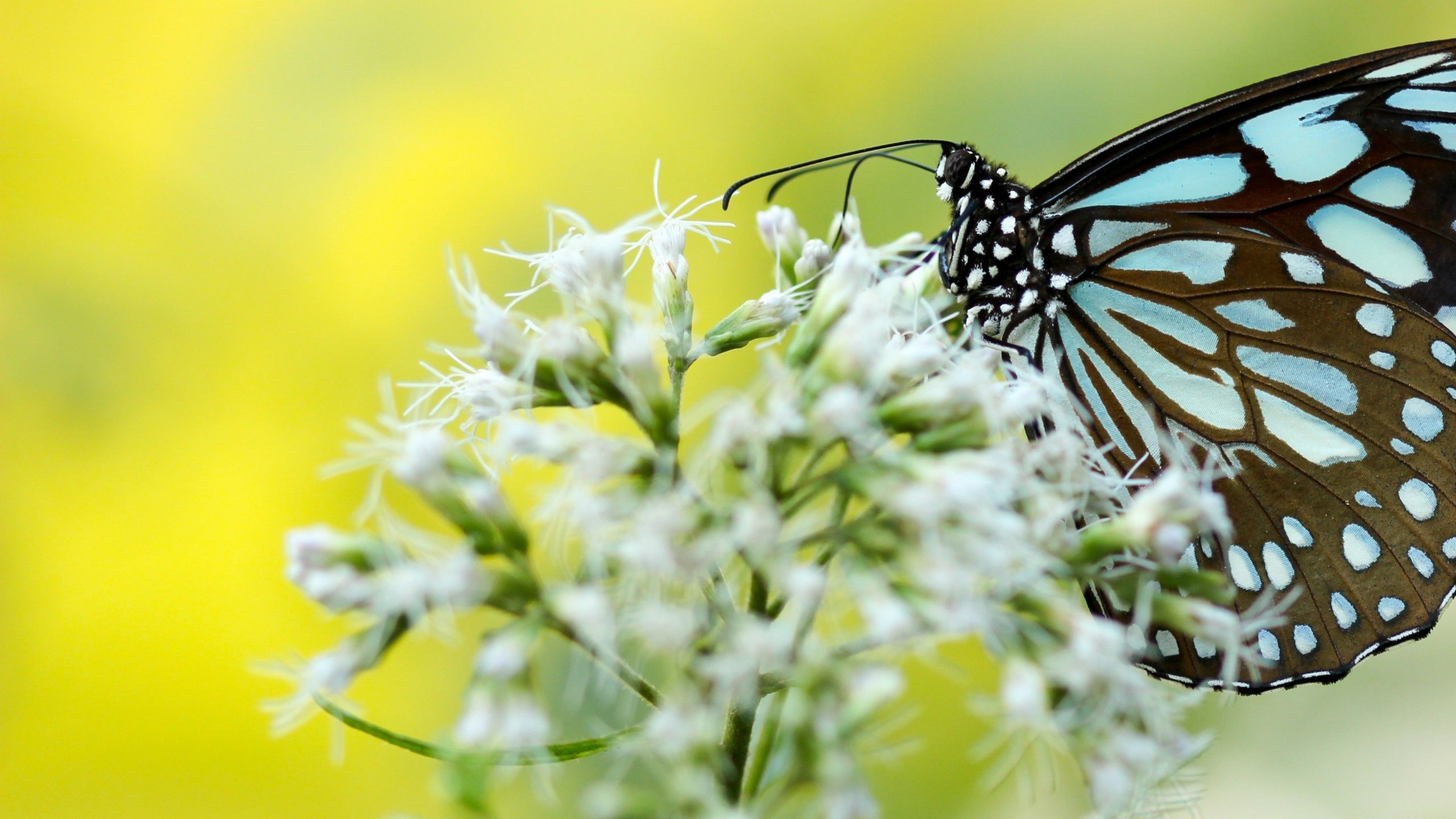 hd images of butterfly