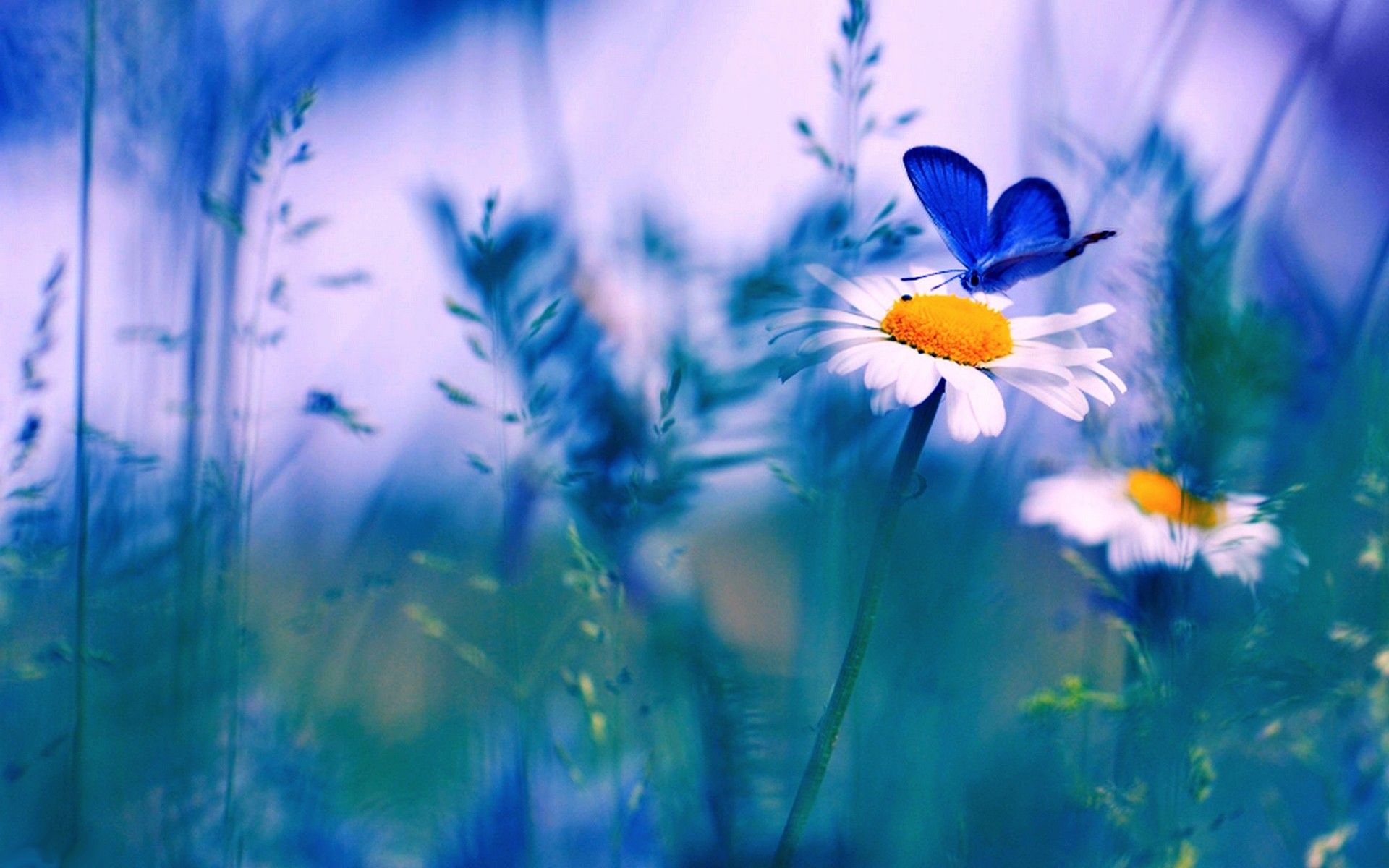 flowers with butterfly wallpaper hd