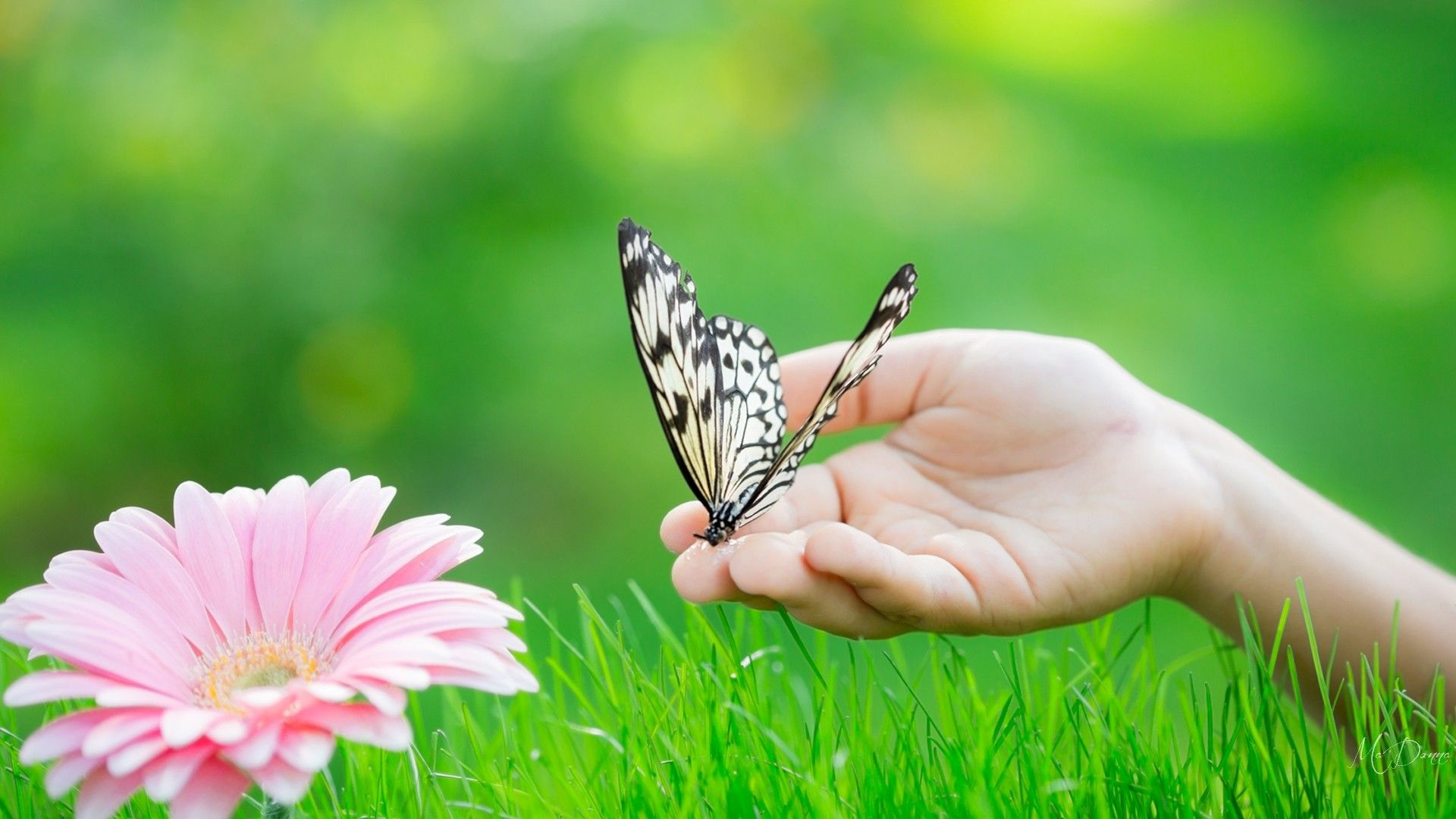 whatsapp dp flowers with butterfly