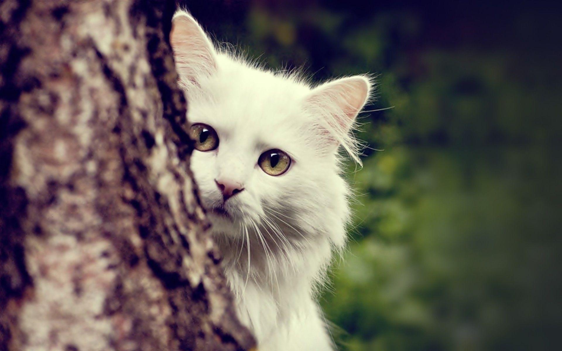 kitty cats wallpaper