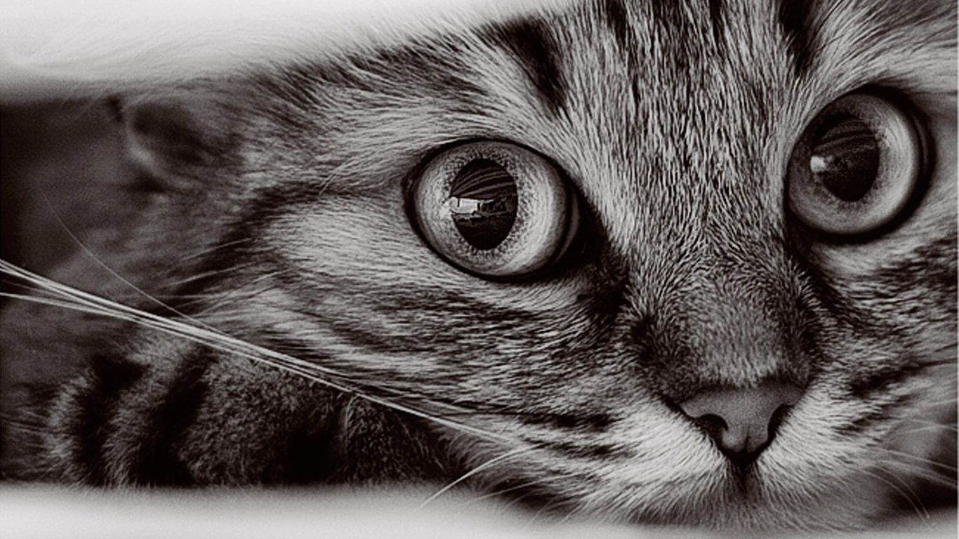 funny cat backgrounds