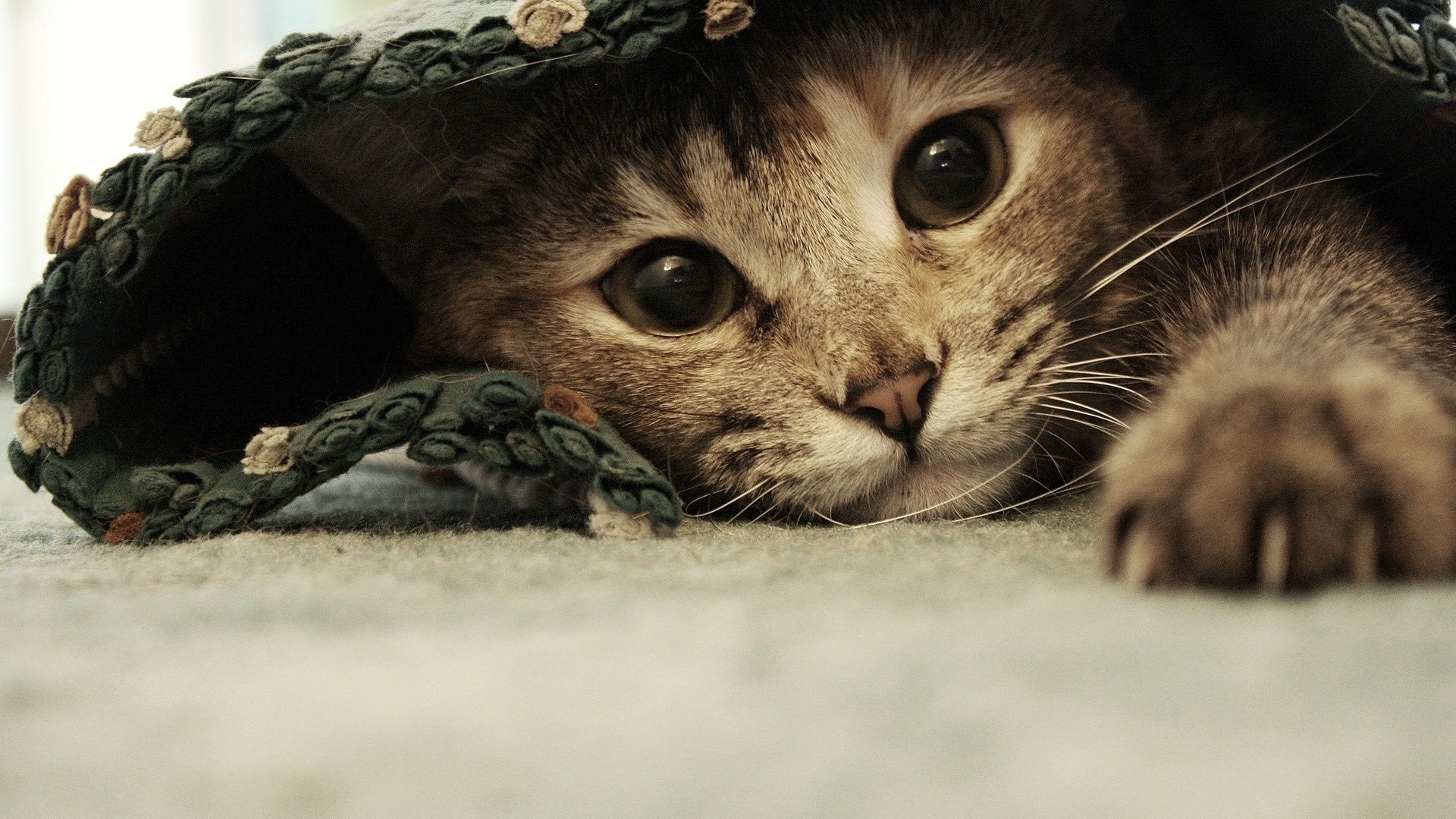 cute cat backgrounds