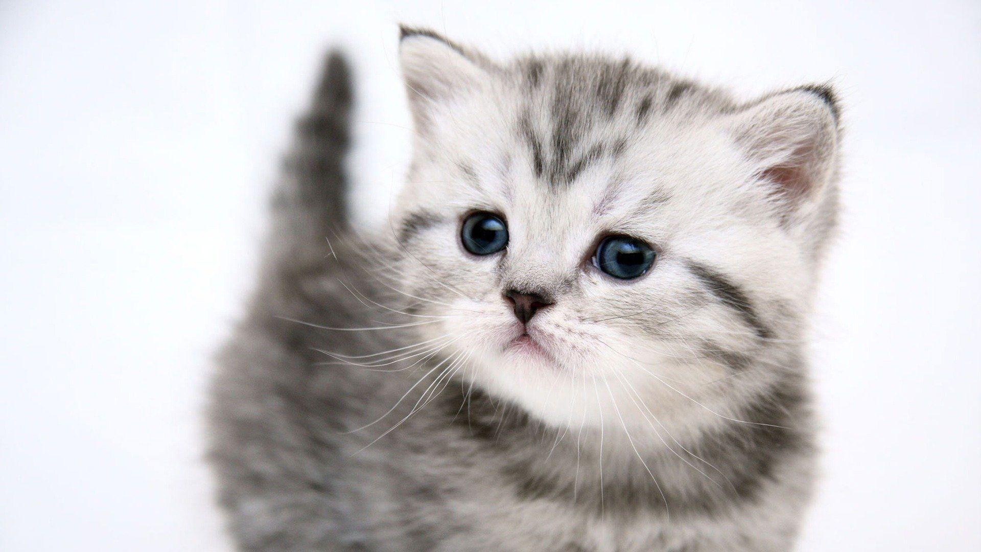 desktop backgrounds cats