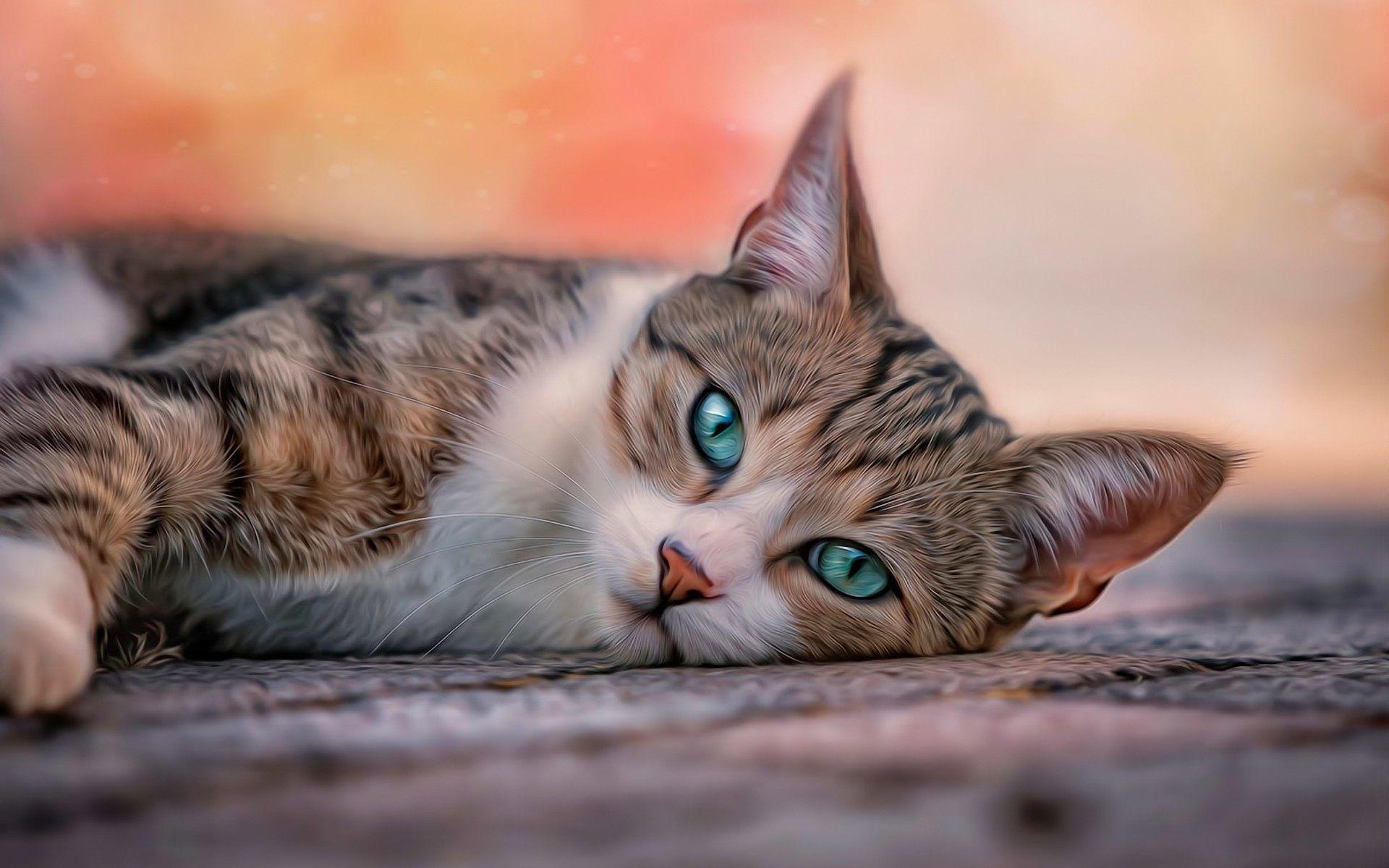 free cat wallpaper
