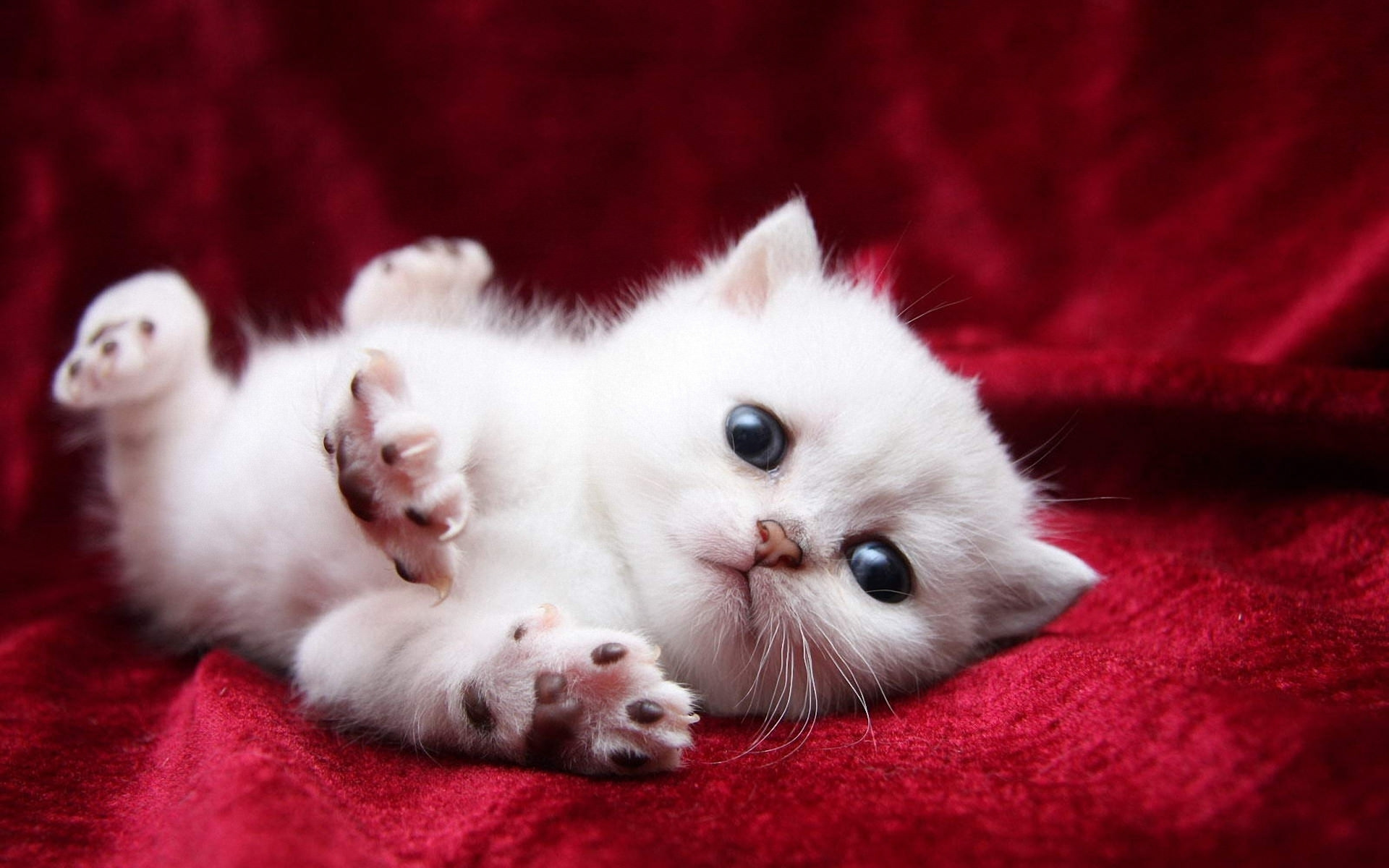 cat picture download