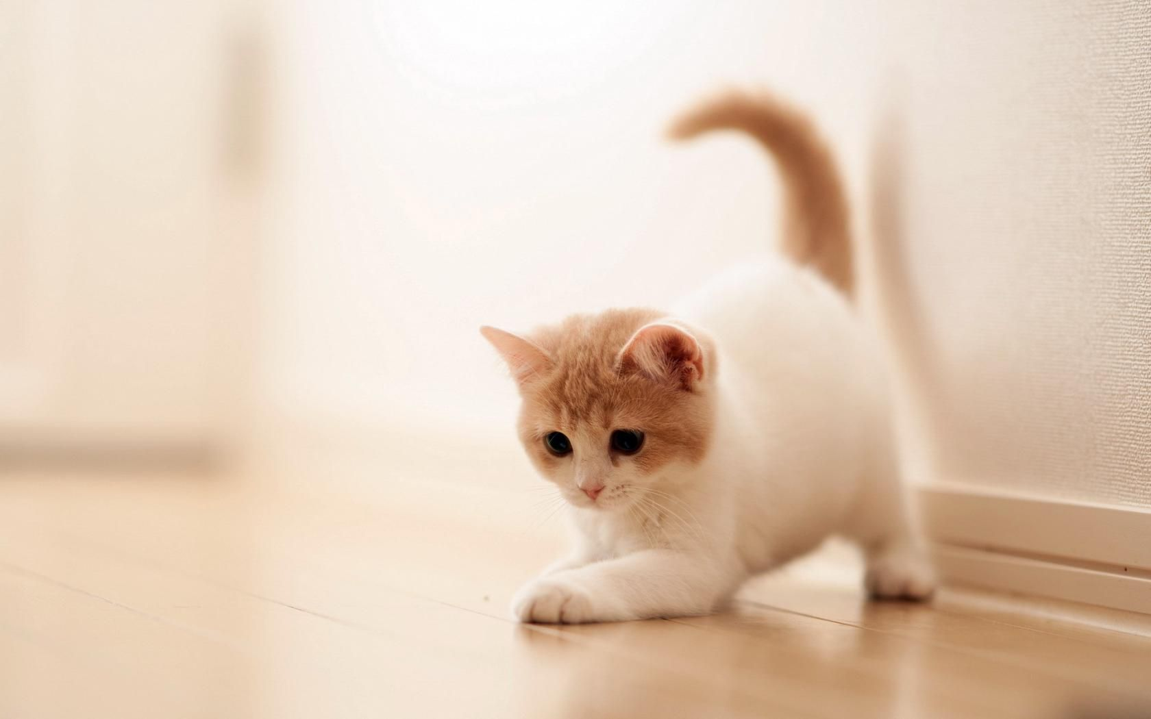adorable cat wallpapers