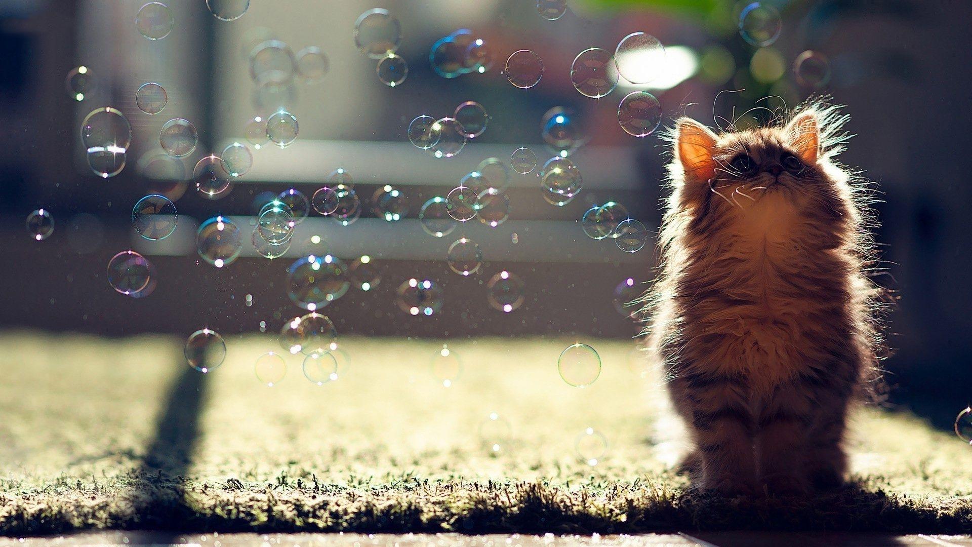 cute cat screensavers