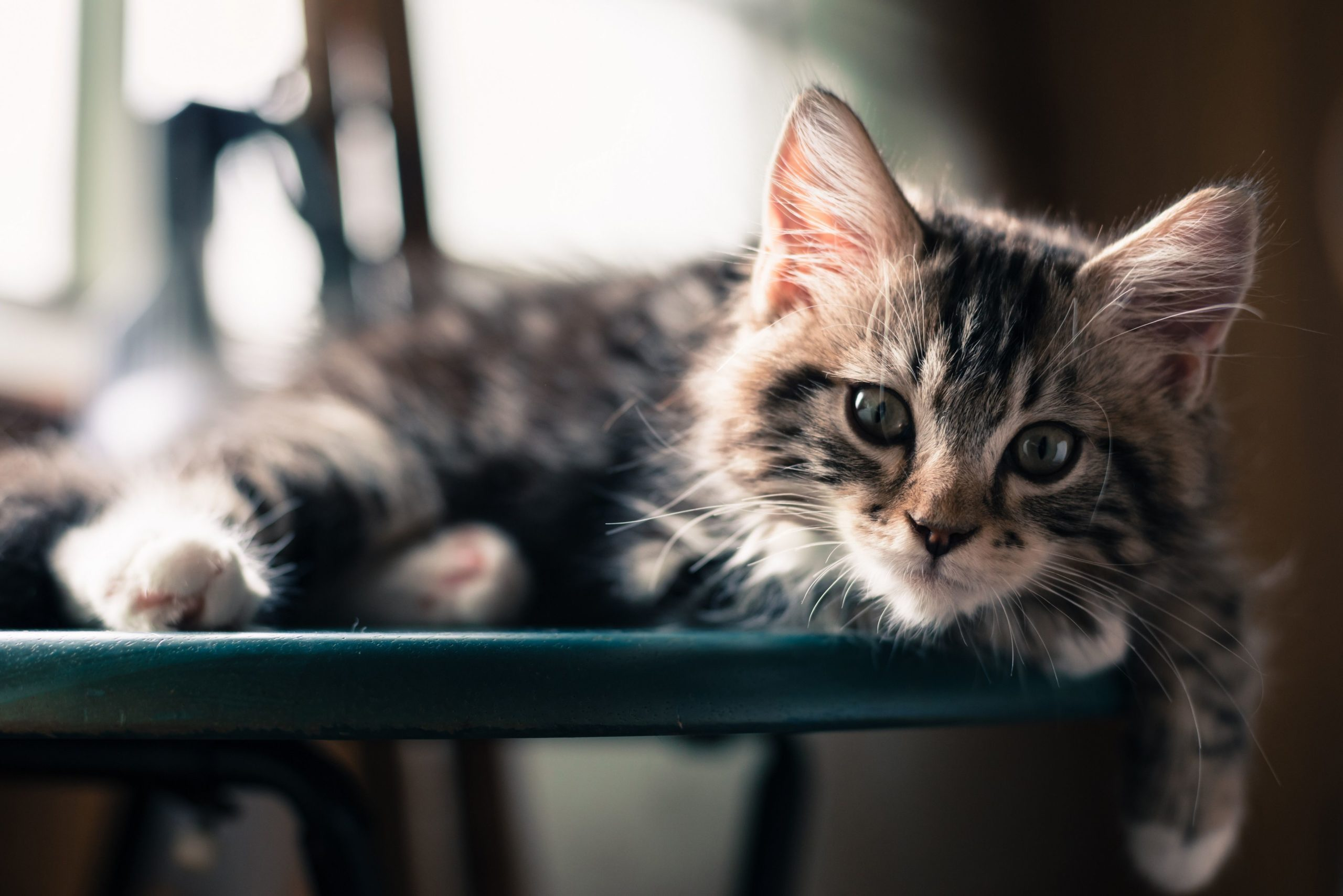 download cat pictures