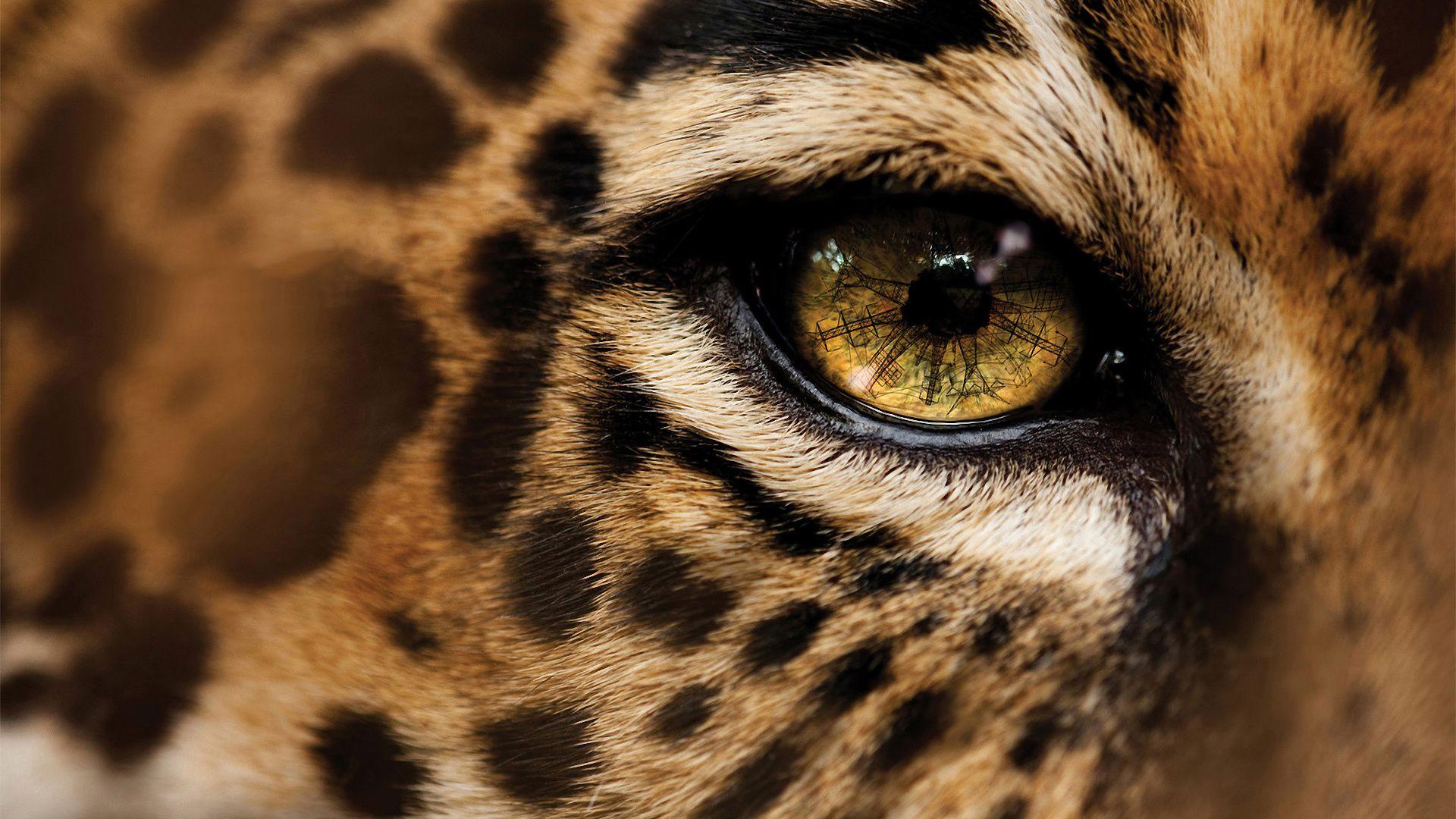 pic of cheetah