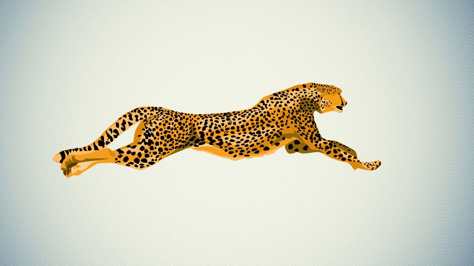 cheetah desktop wallpaper