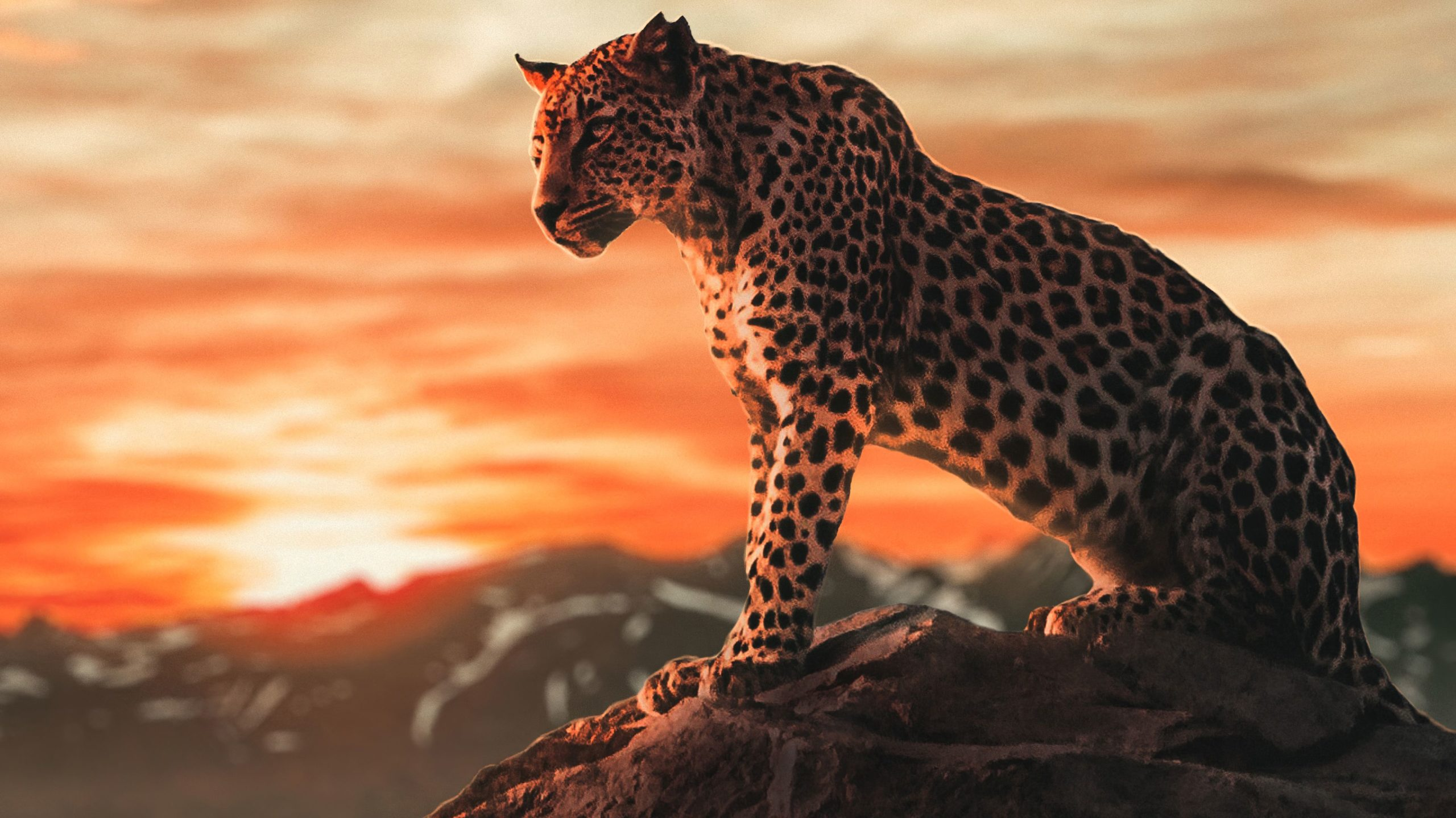 cheetah running images