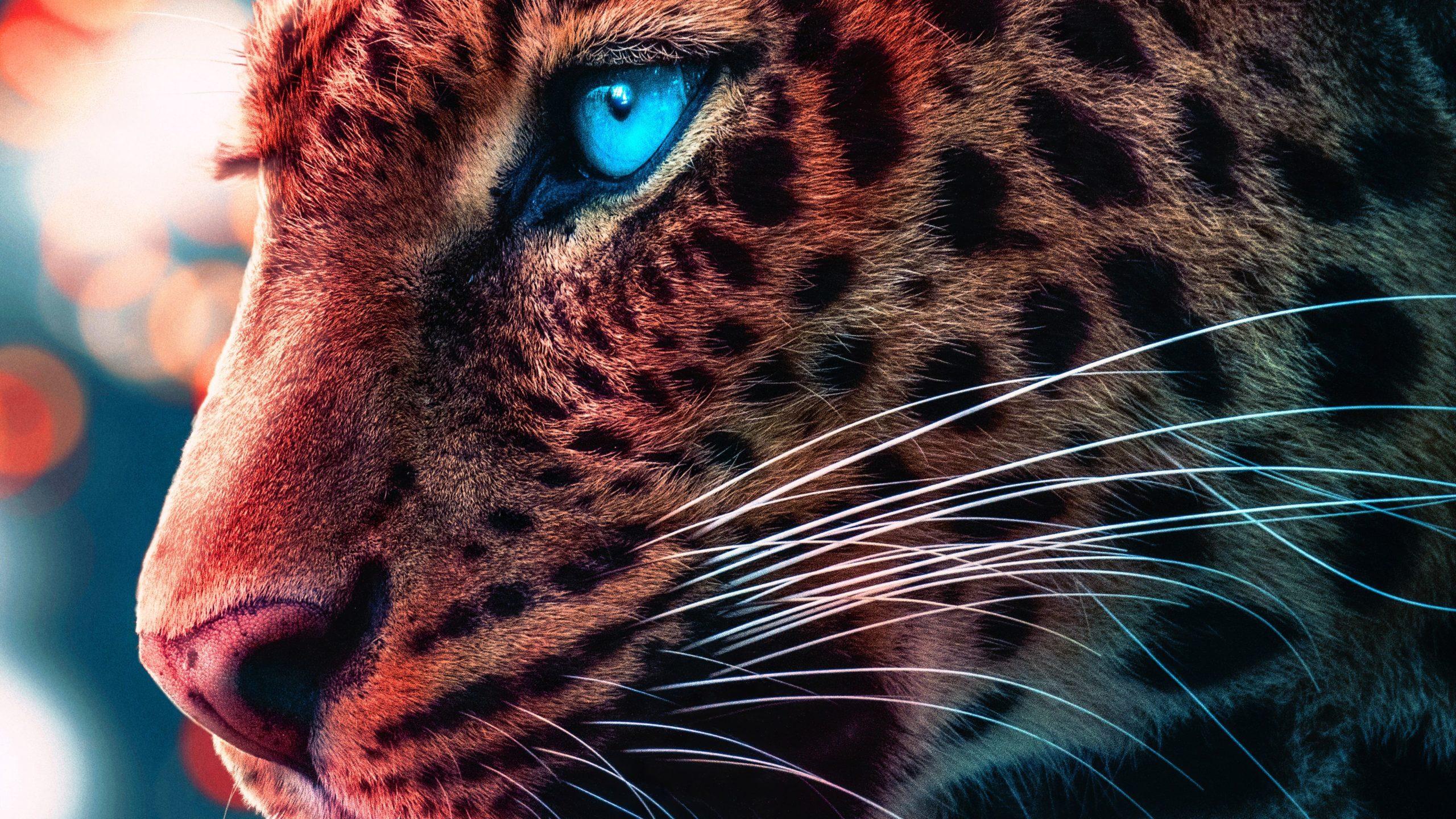 cheetah hd wallpapers