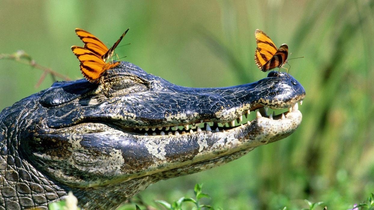 croc pics