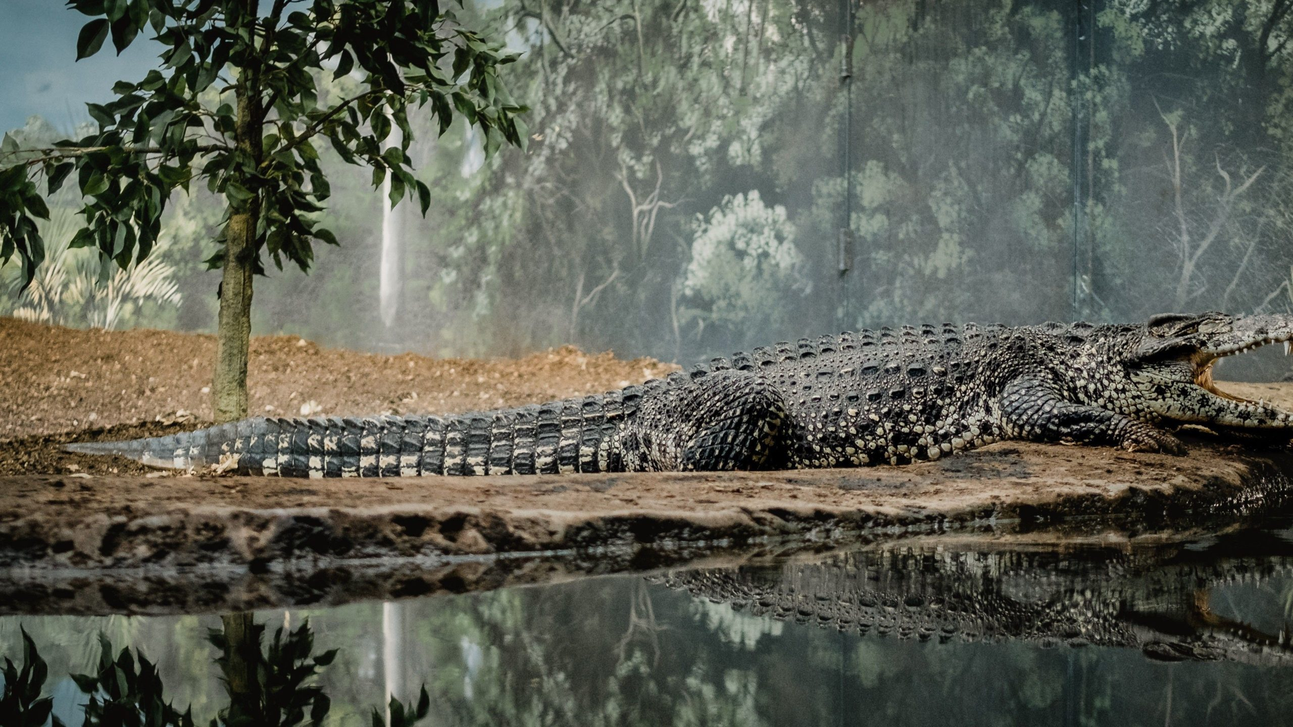 a picture of a crocodile