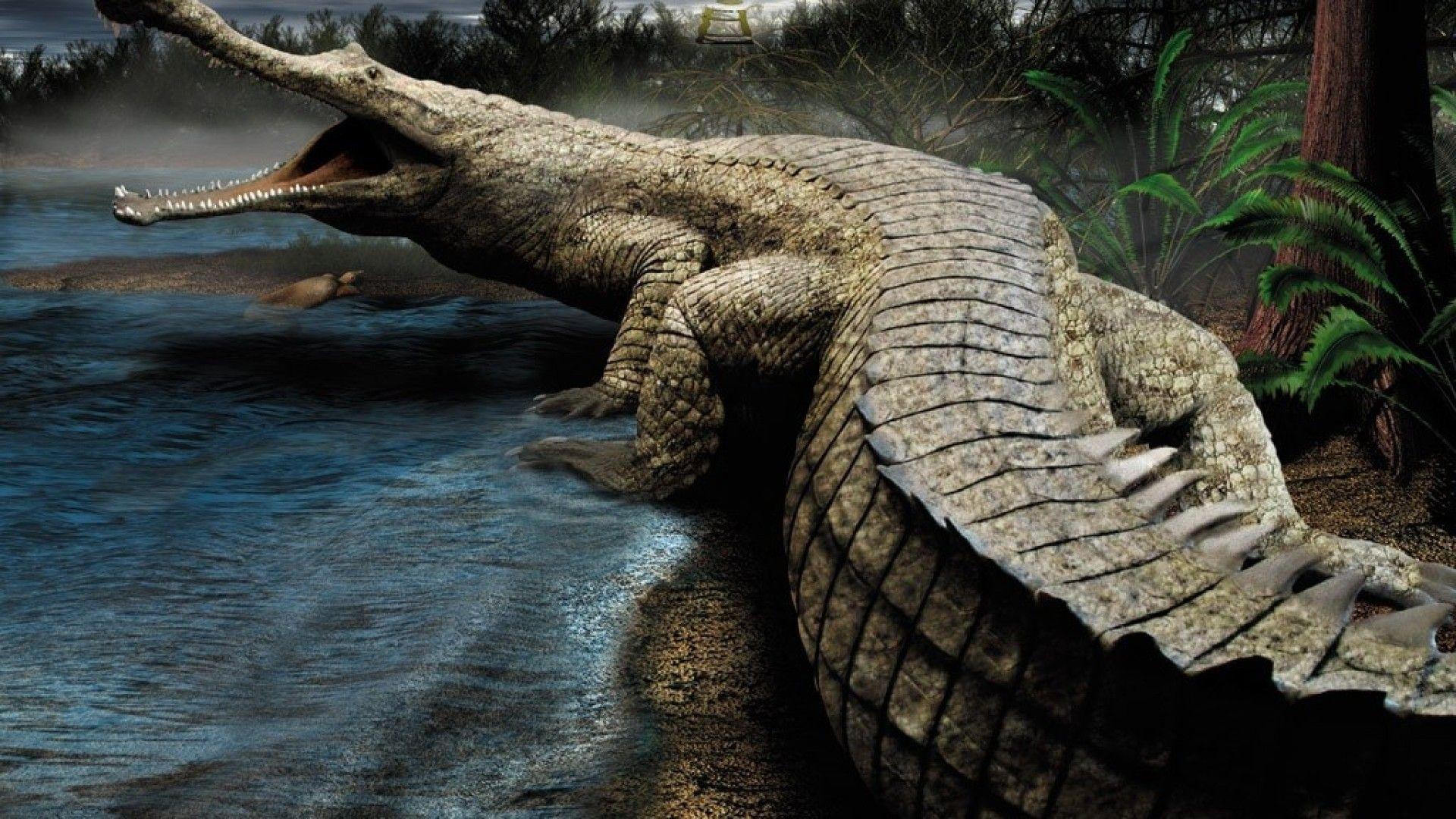 crocodile photography