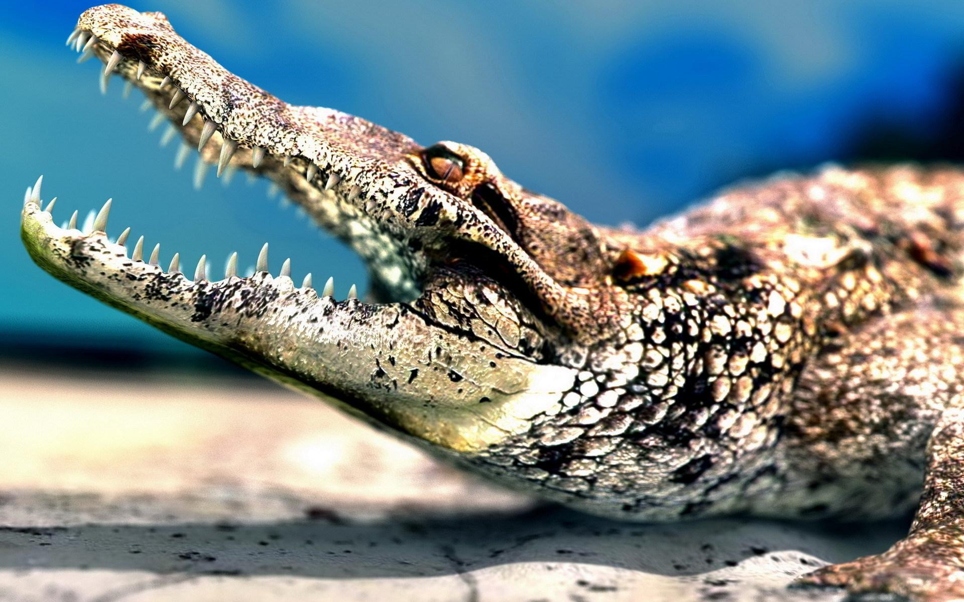 pictures of big crocodiles