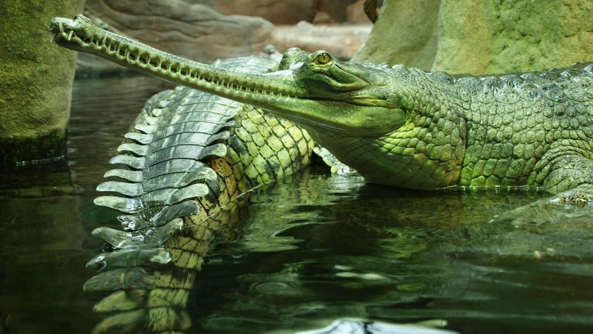 funny crocodile pictures