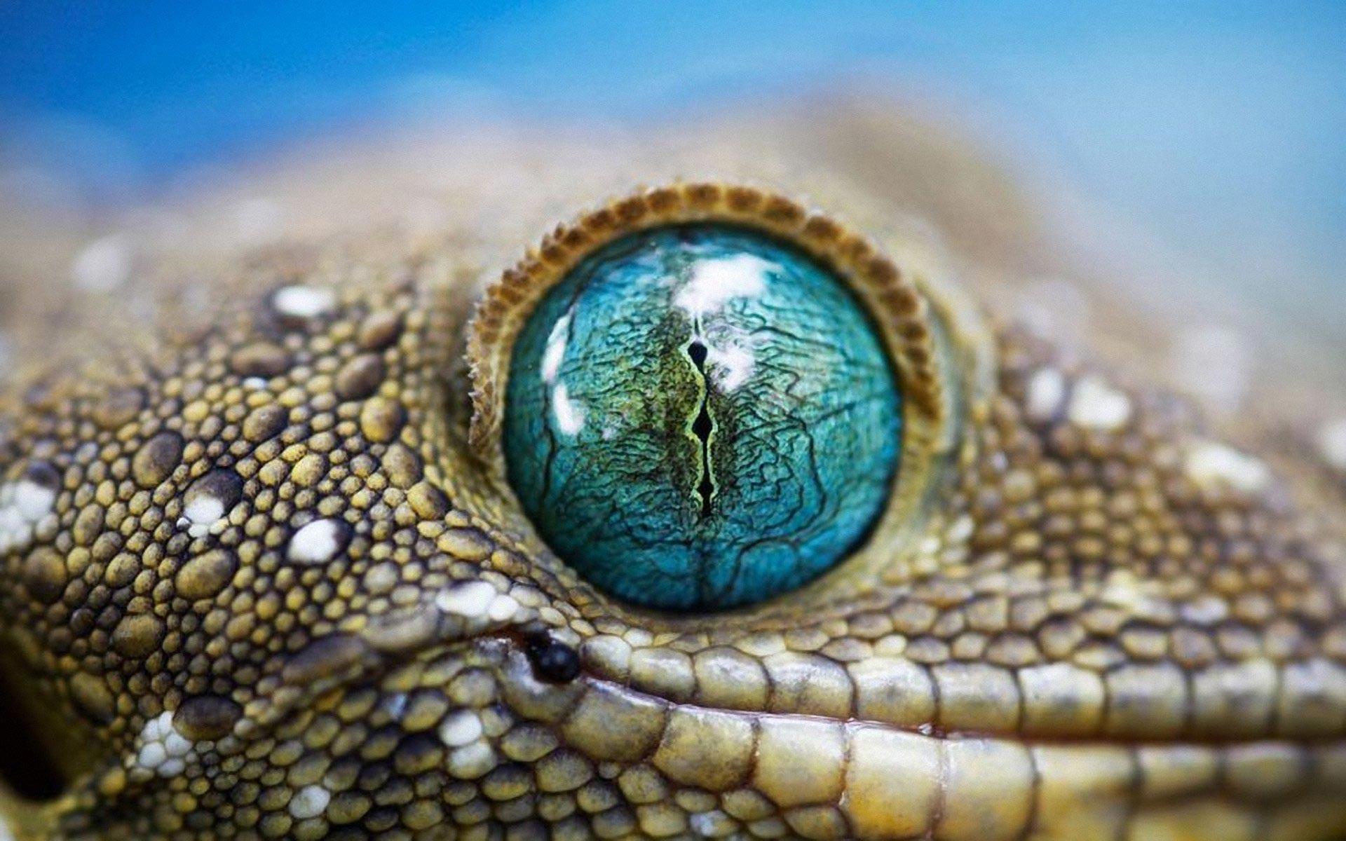 crocodile eye wallpapers