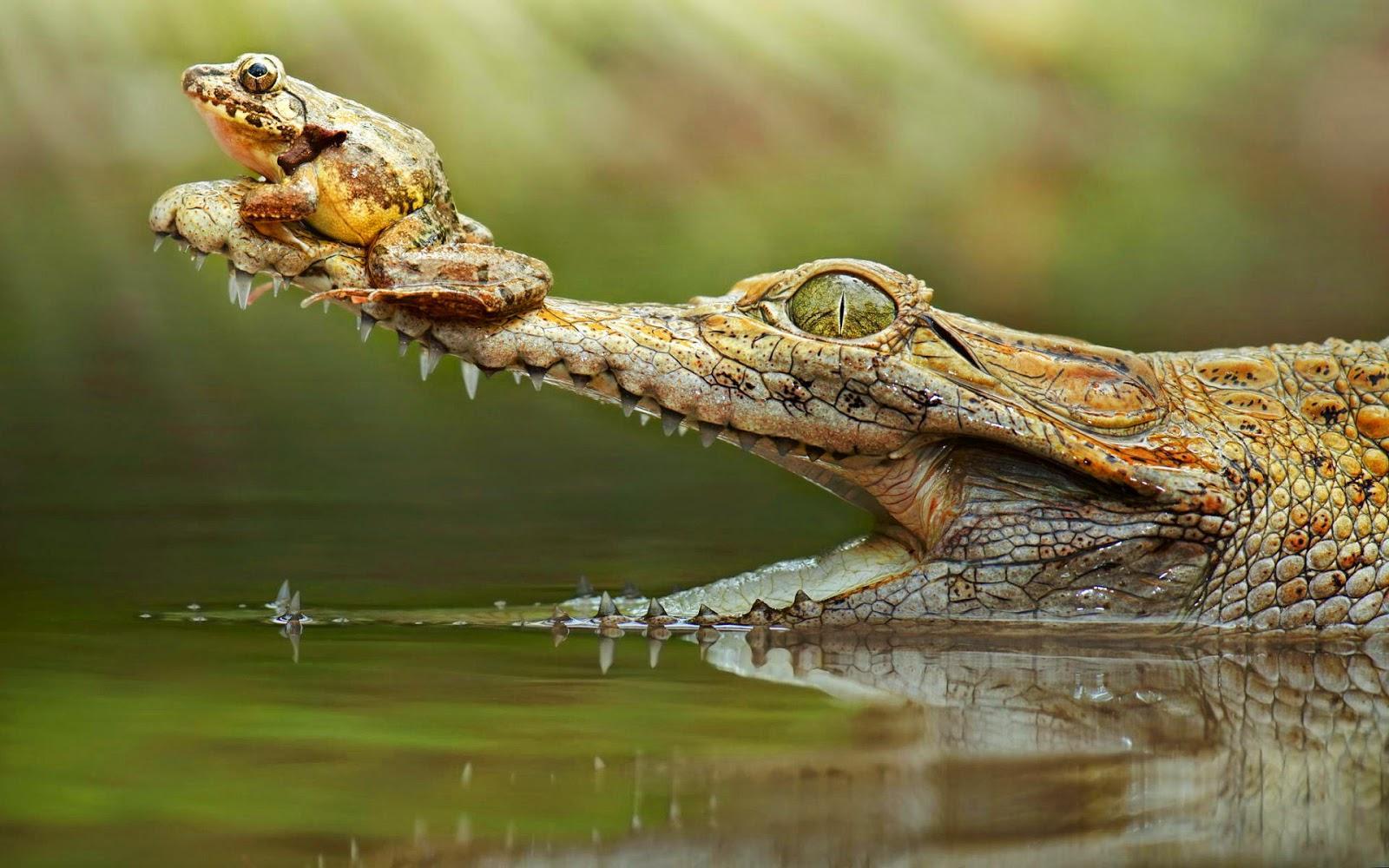 pics of krokodil