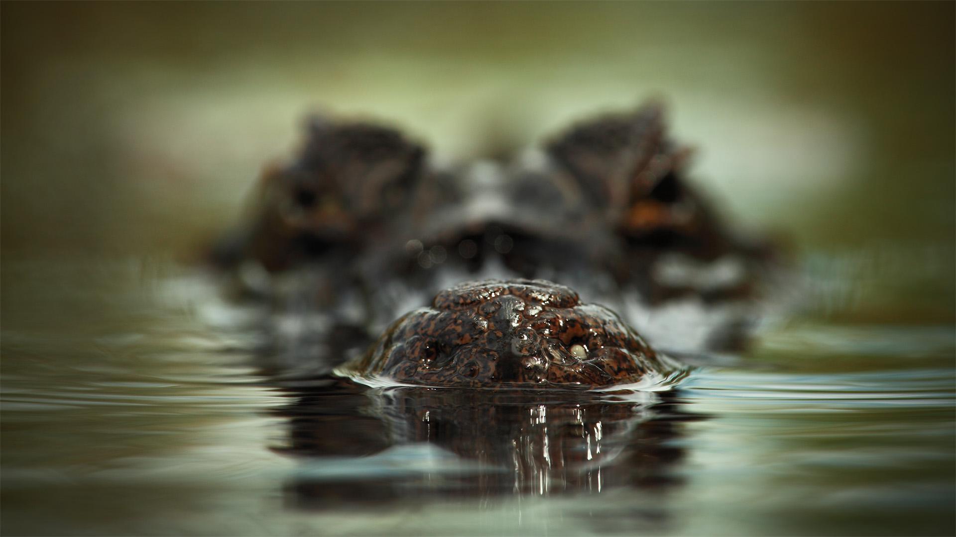 krokodil user pictures