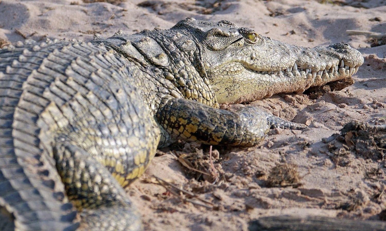 pics of krokodil users