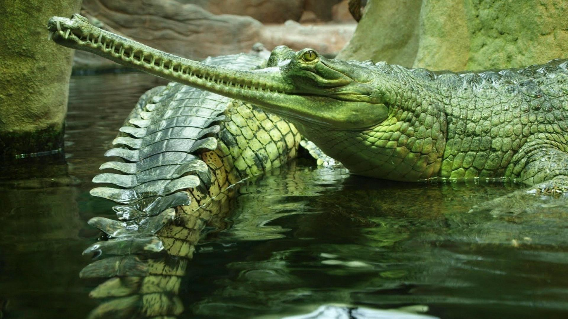 pictures of the biggest crocodile