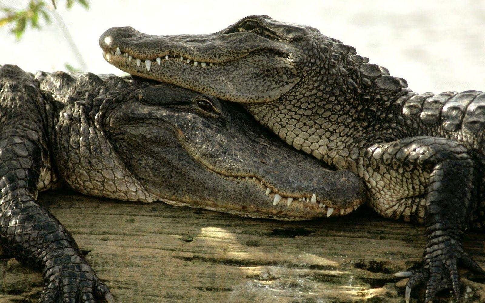 giant croc pictures hd free