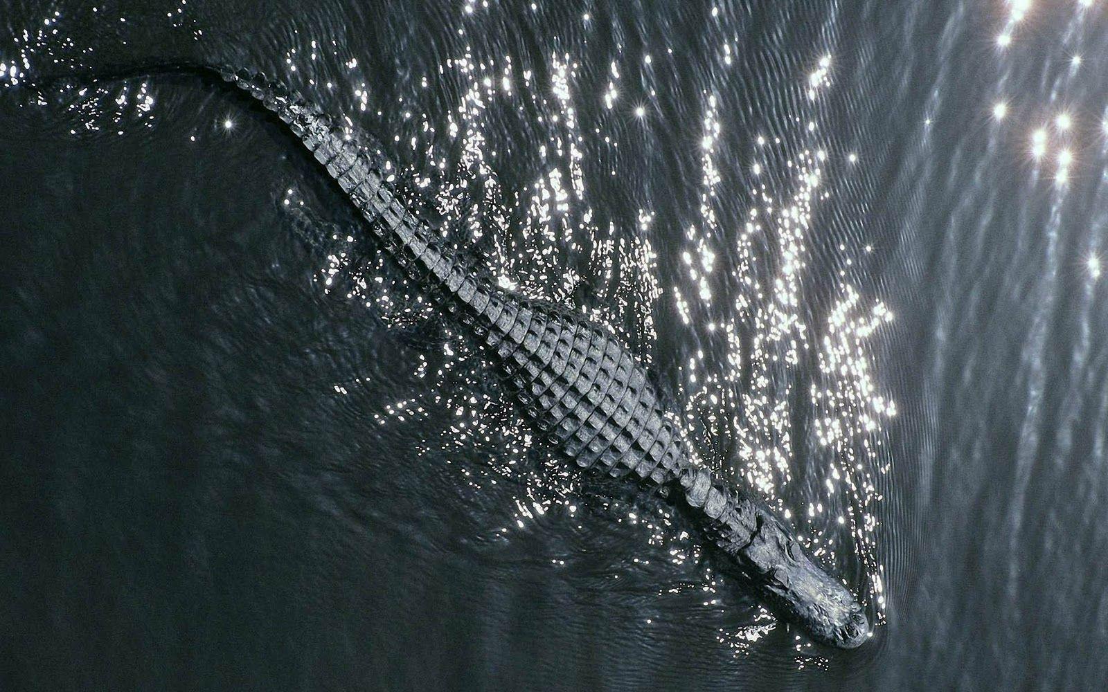 crocodile cartoon wallpapers