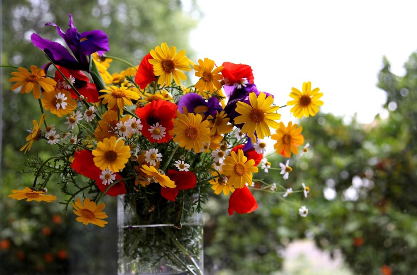 daisy pics