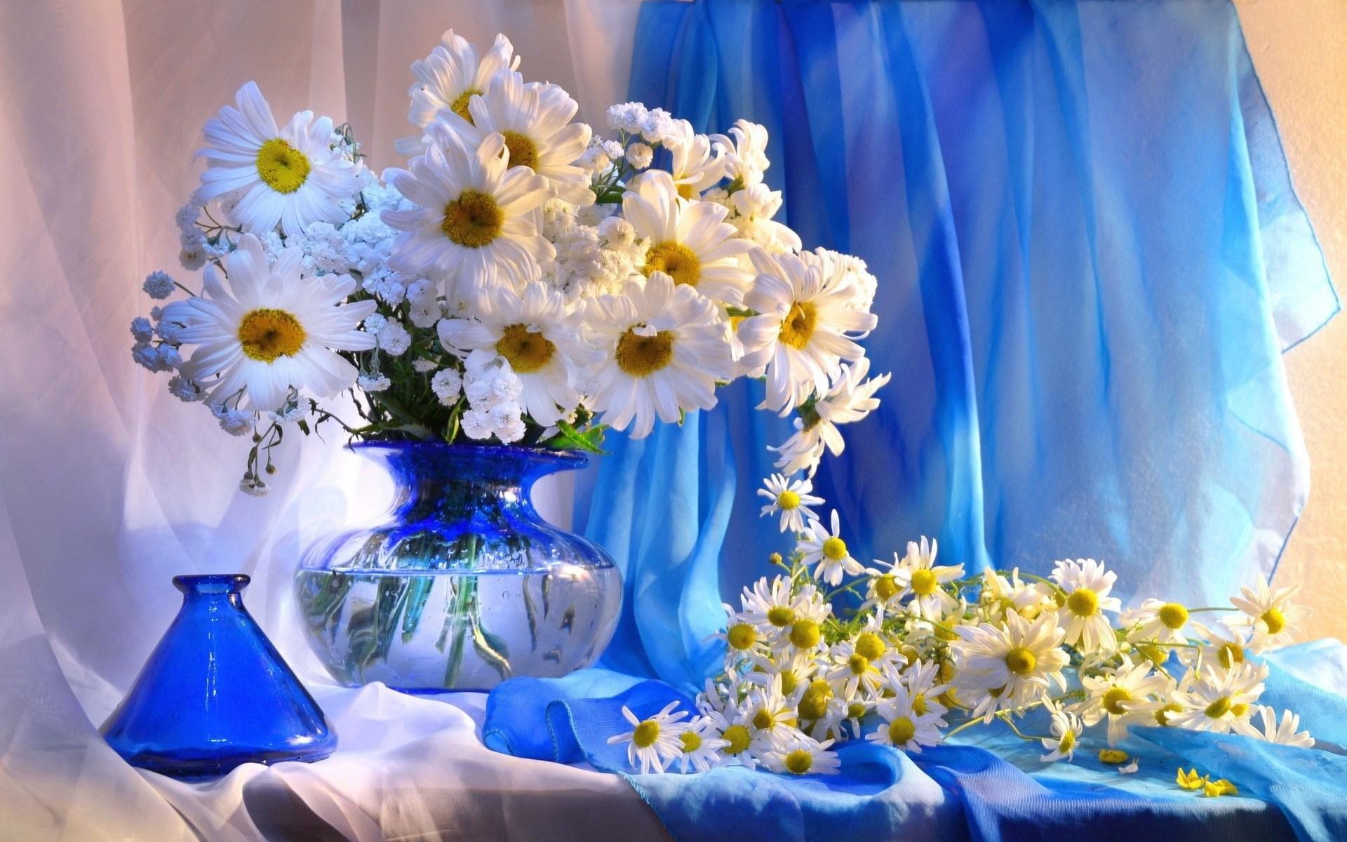 daisy photographs